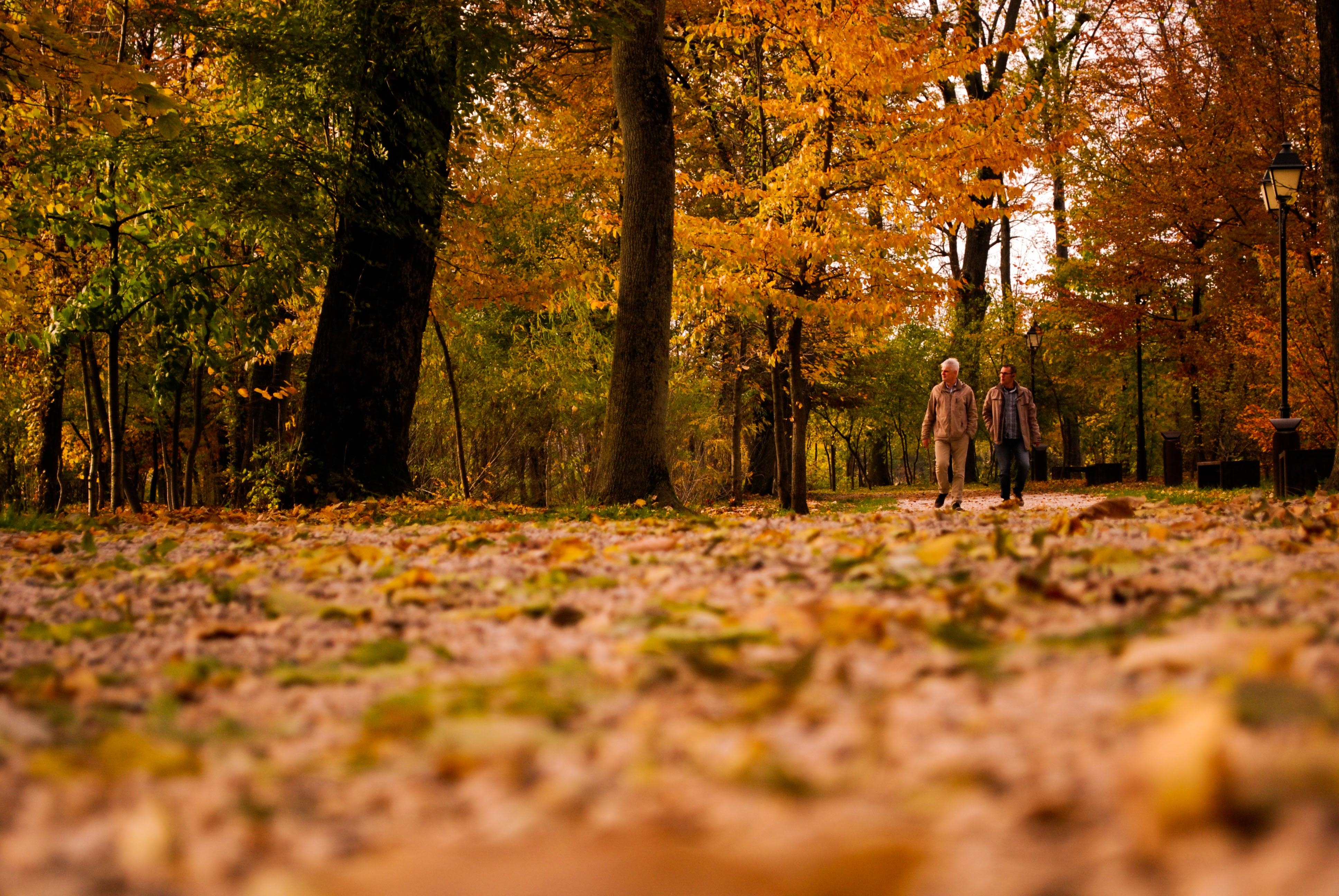 View of Trees in Forest during Autumn, Autumn, Men, Trees, Sun, HQ Photo