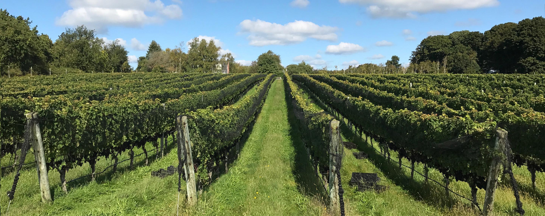 Harbes Vineyard - Harbes Farm