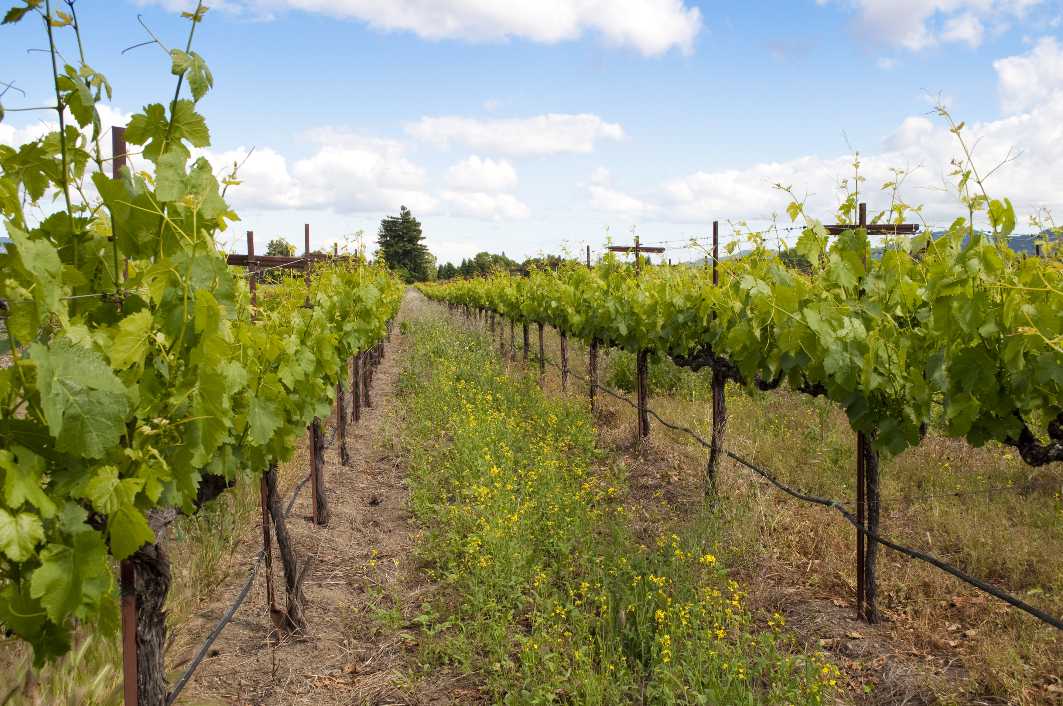 Vineyard photo