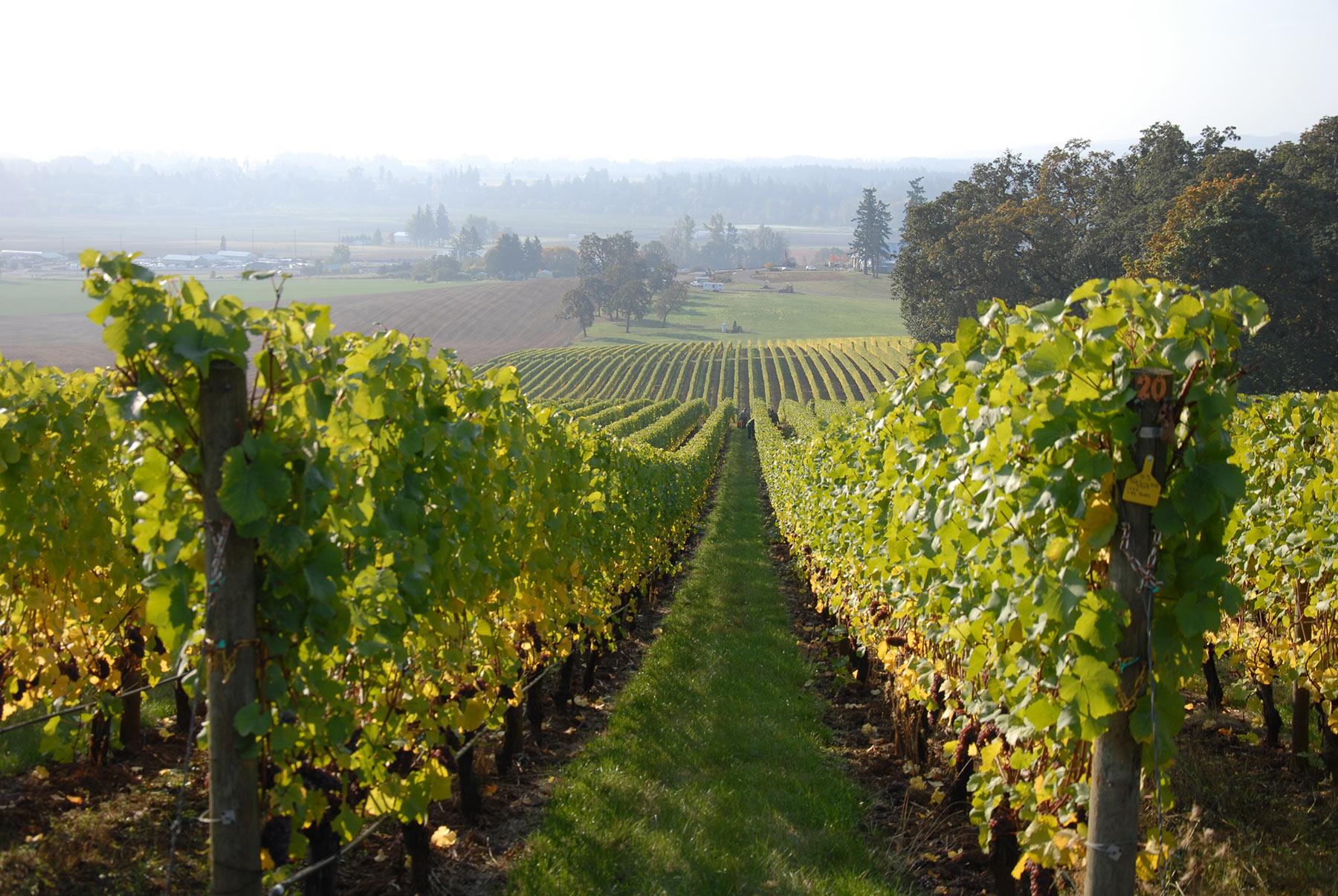 Stoller-Vineyard | Chehalem Winery
