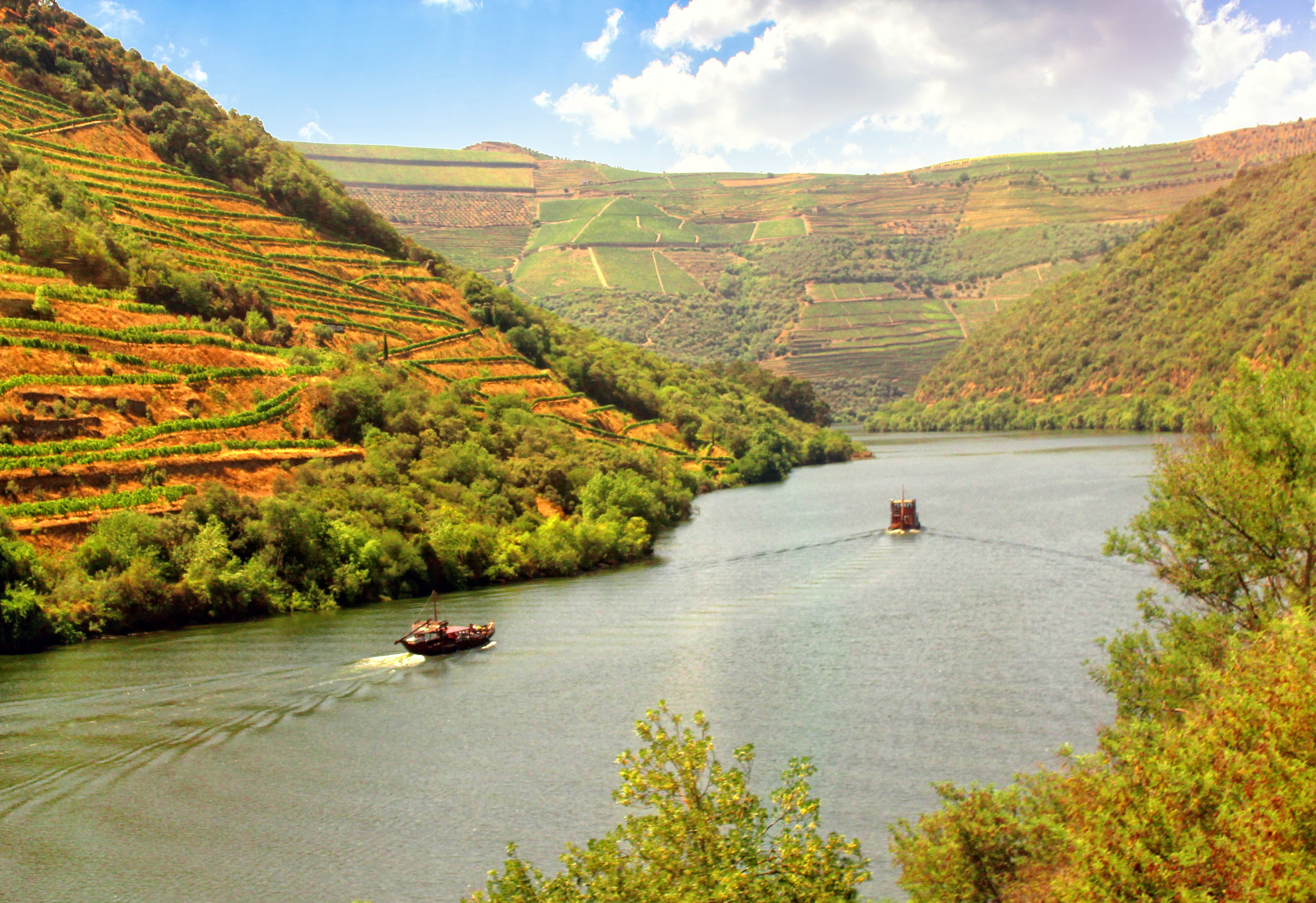 Vineyards on the banks of douro river - douro valley - portugal photo