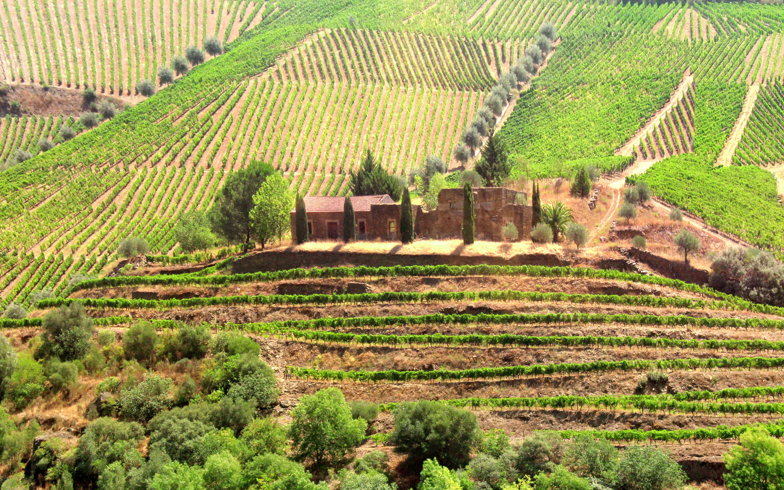 Vineyards Surrounding Old Country Estate - Douro Valley, Agriculture, Port, Scenery, Sandeman, HQ Photo