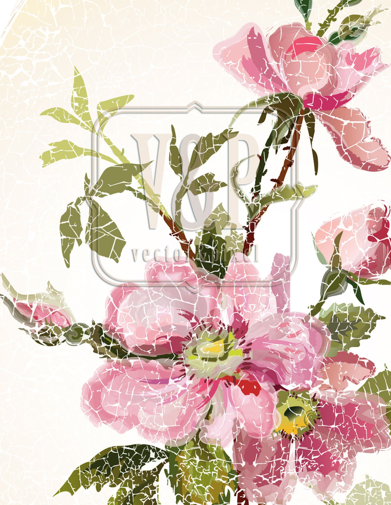 Wild Rose flowers are drawn in a vector program and look like a ...