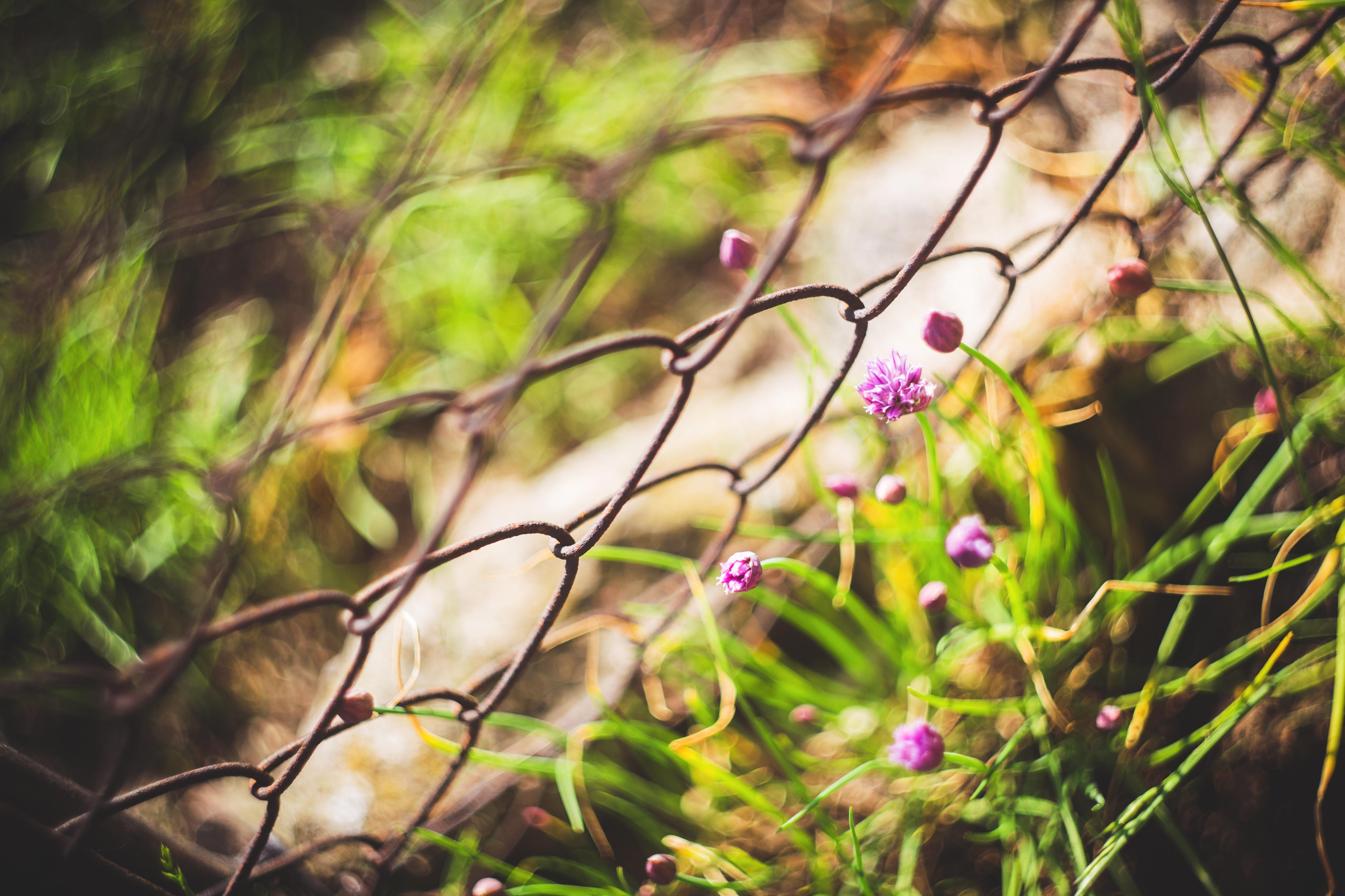 Vintage photo of a beautiful purple flowers, Macro, Summer, Spring, Purple, HQ Photo