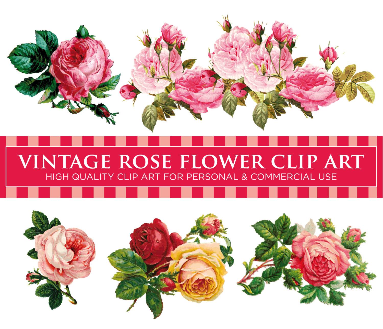 Free photo: Vintage Rose - Aroma, Growing, Rose - Free ...