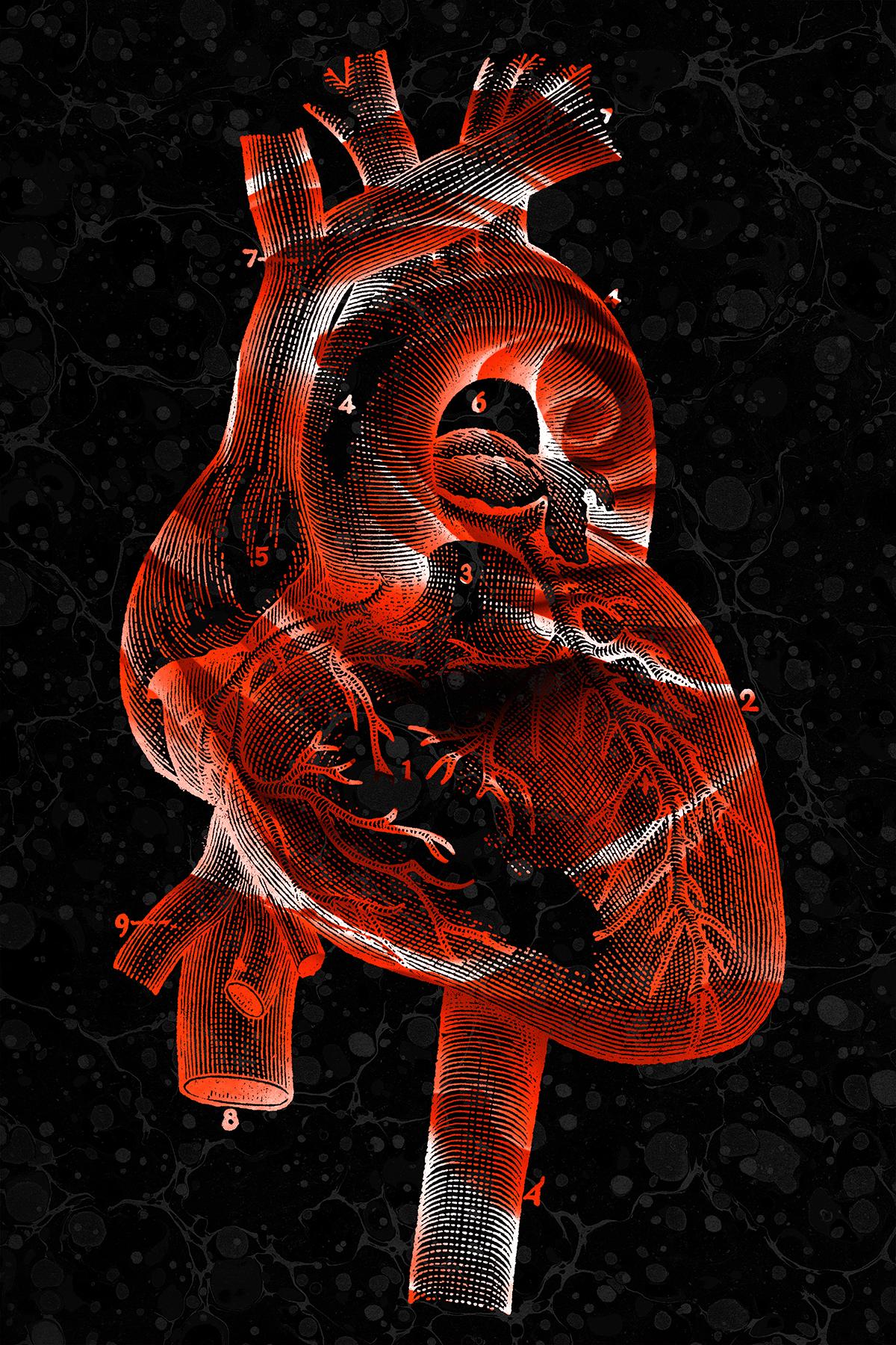 Vintage rose heart photo