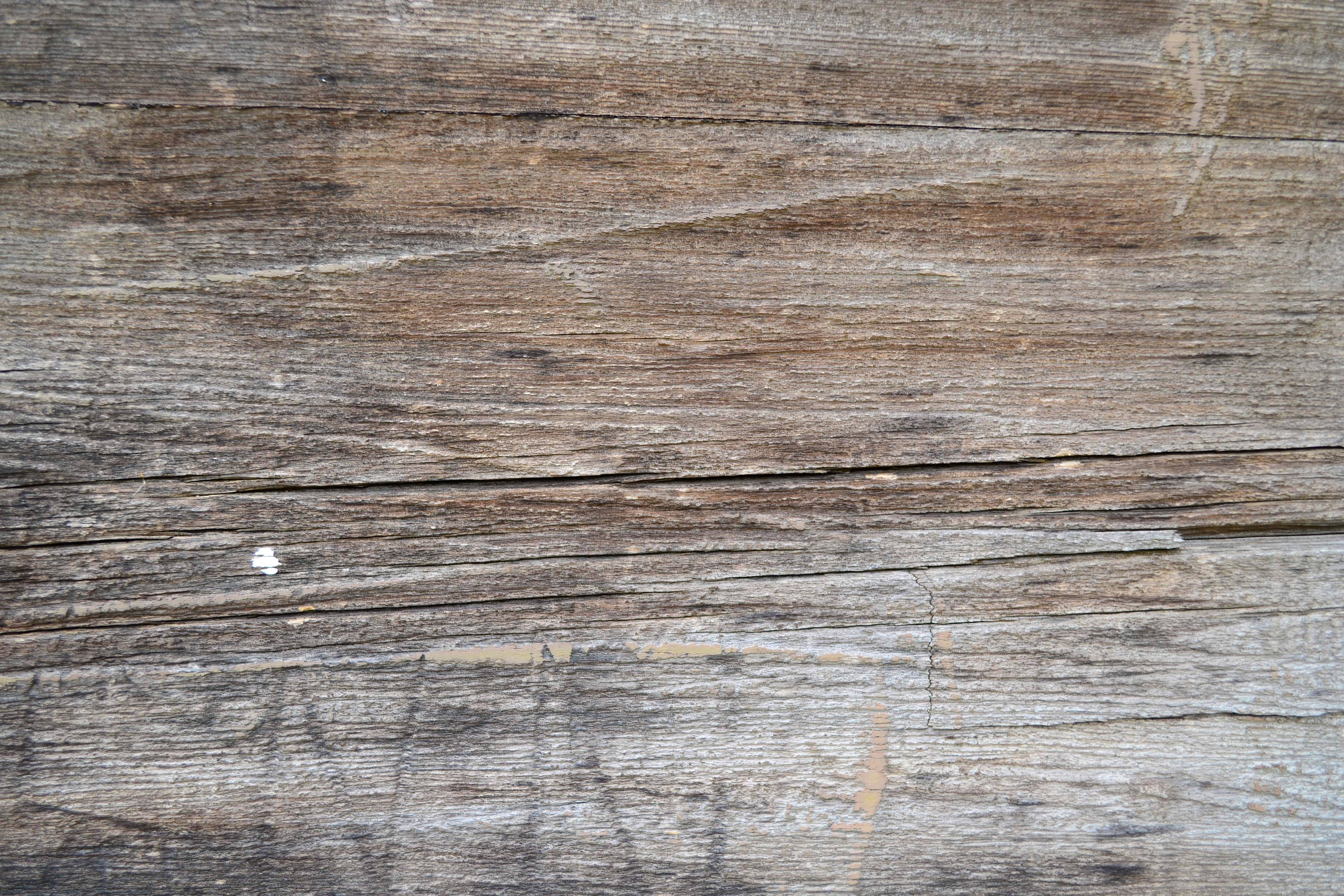 Free Photo Vintage Wood Texture Vintage Wood Tree