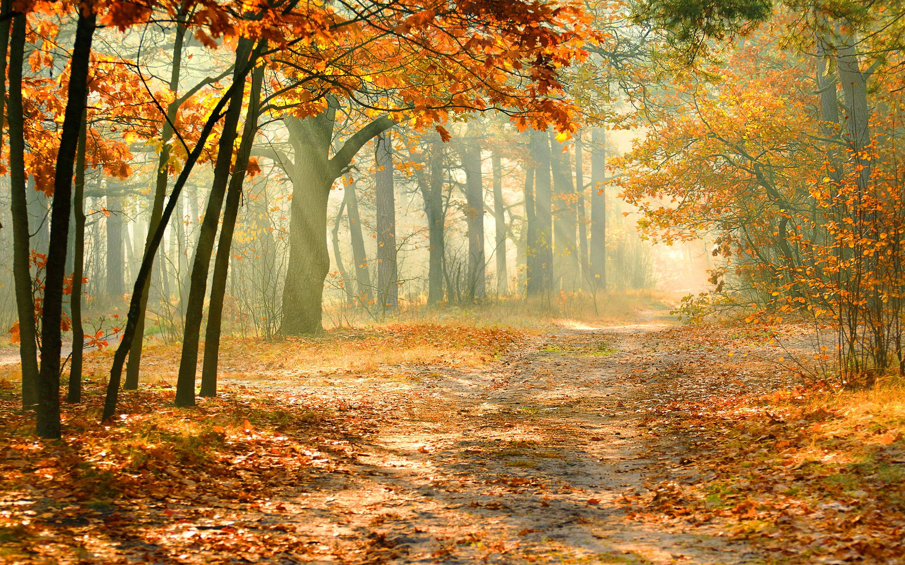 Virtual autumn background photo