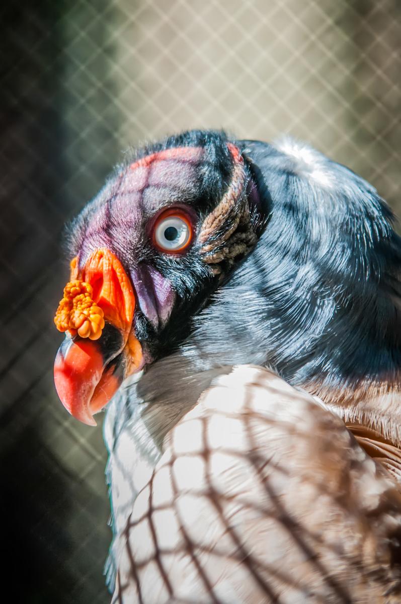 Vulture photo