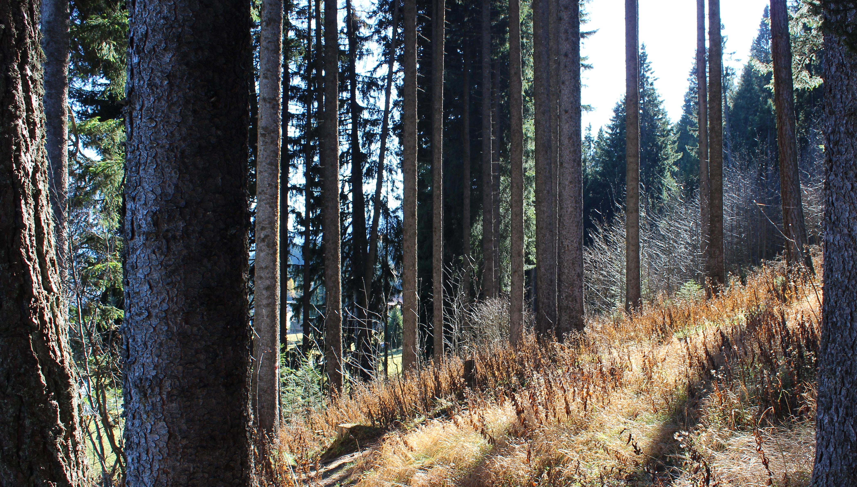 Wald im herbst photo