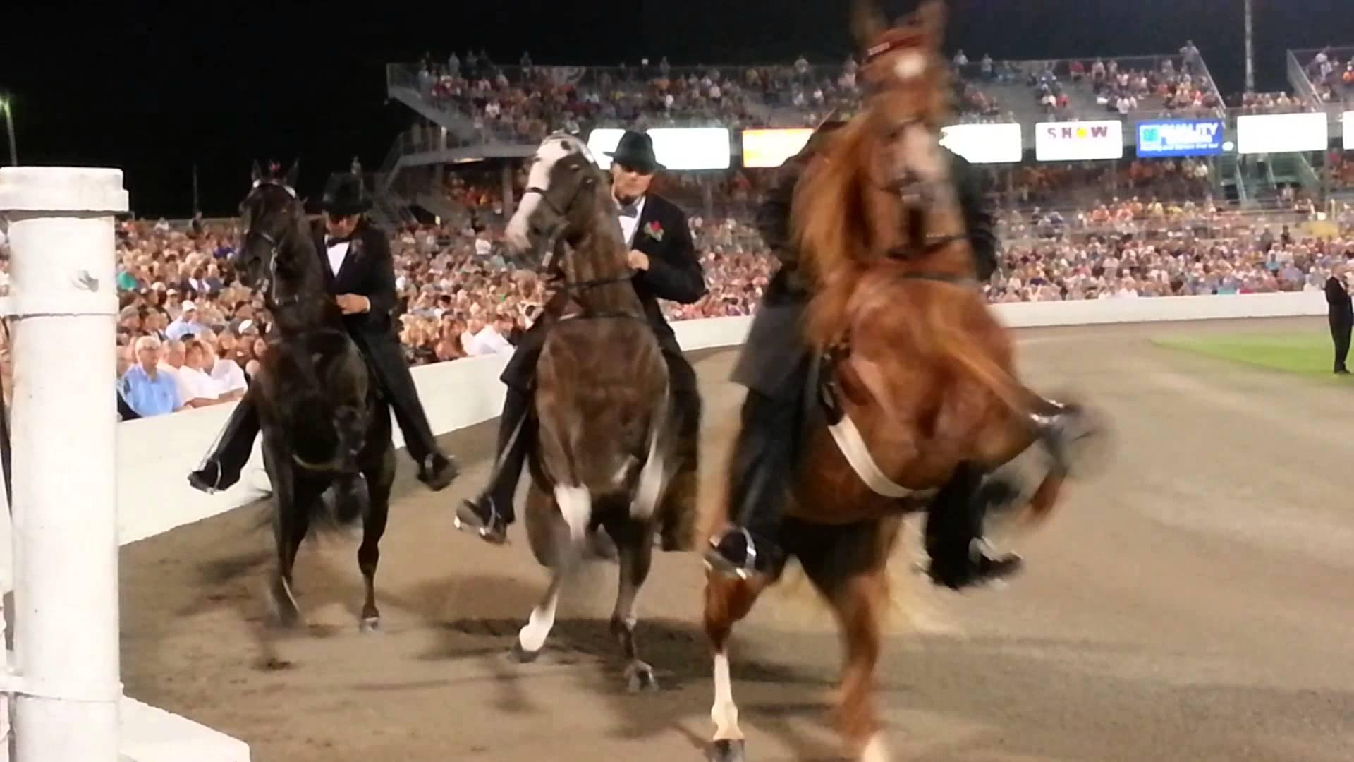 2013 WGC Tennessee Walking Horse Celebration Stake - YouTube