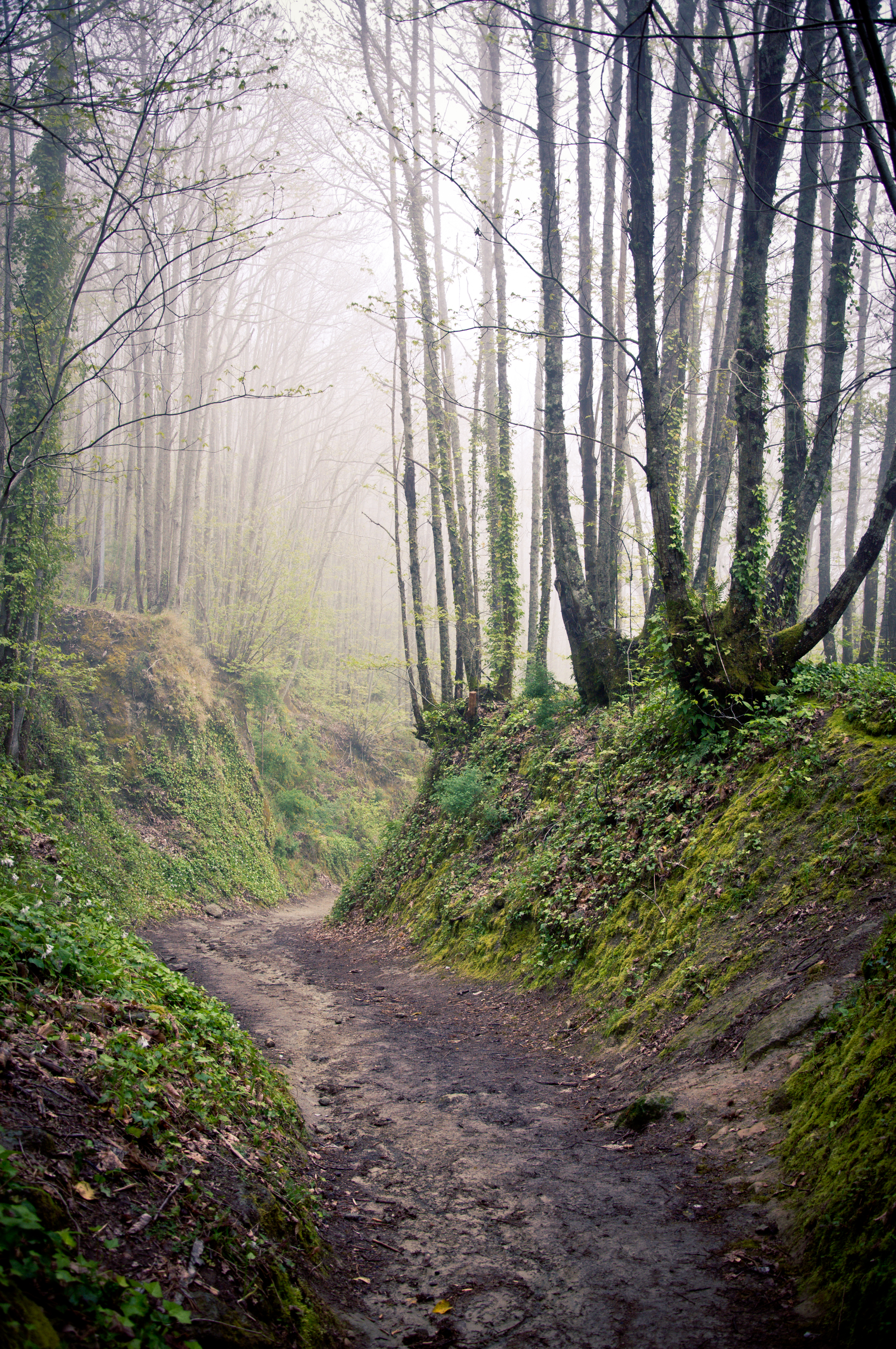 Walking path in forest at morning photo