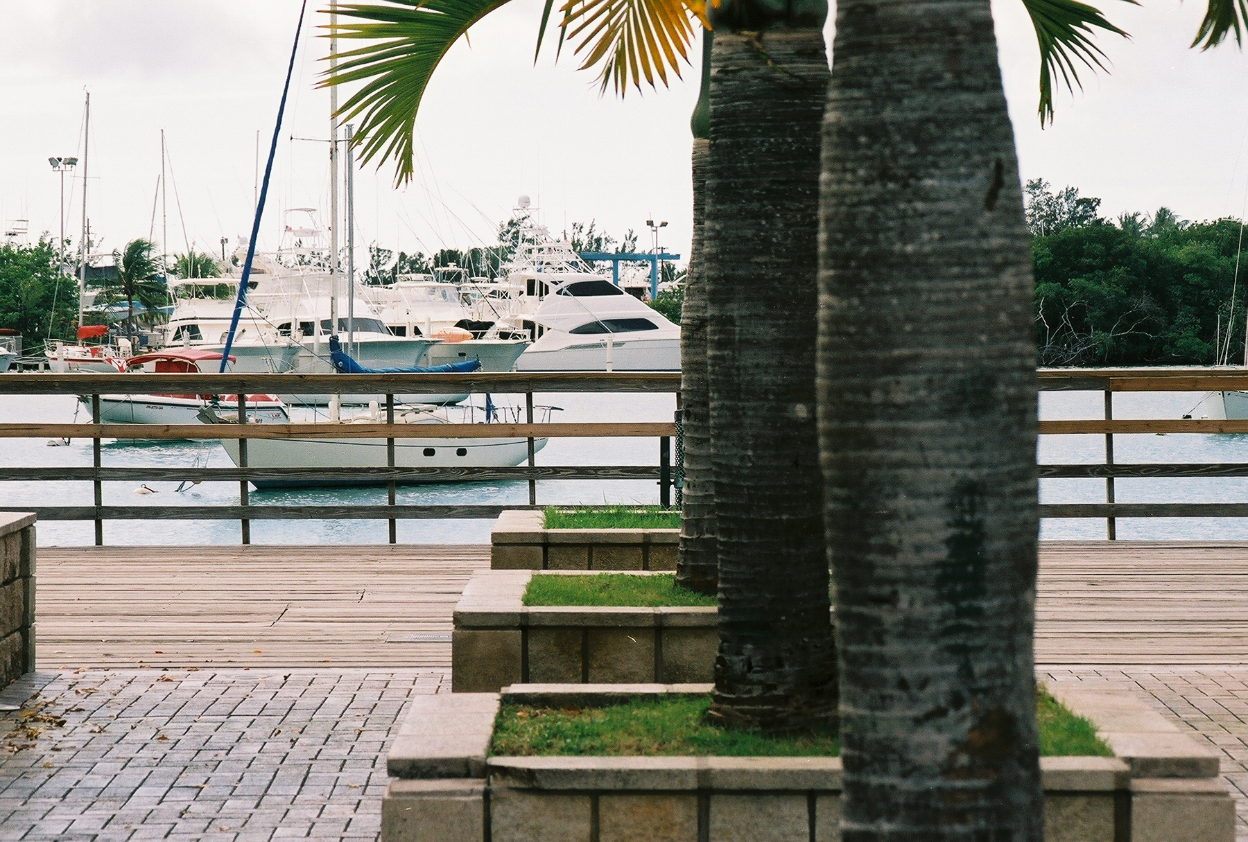 Walkway by the sea, Boats, Ocean, Palms, Trees, HQ Photo