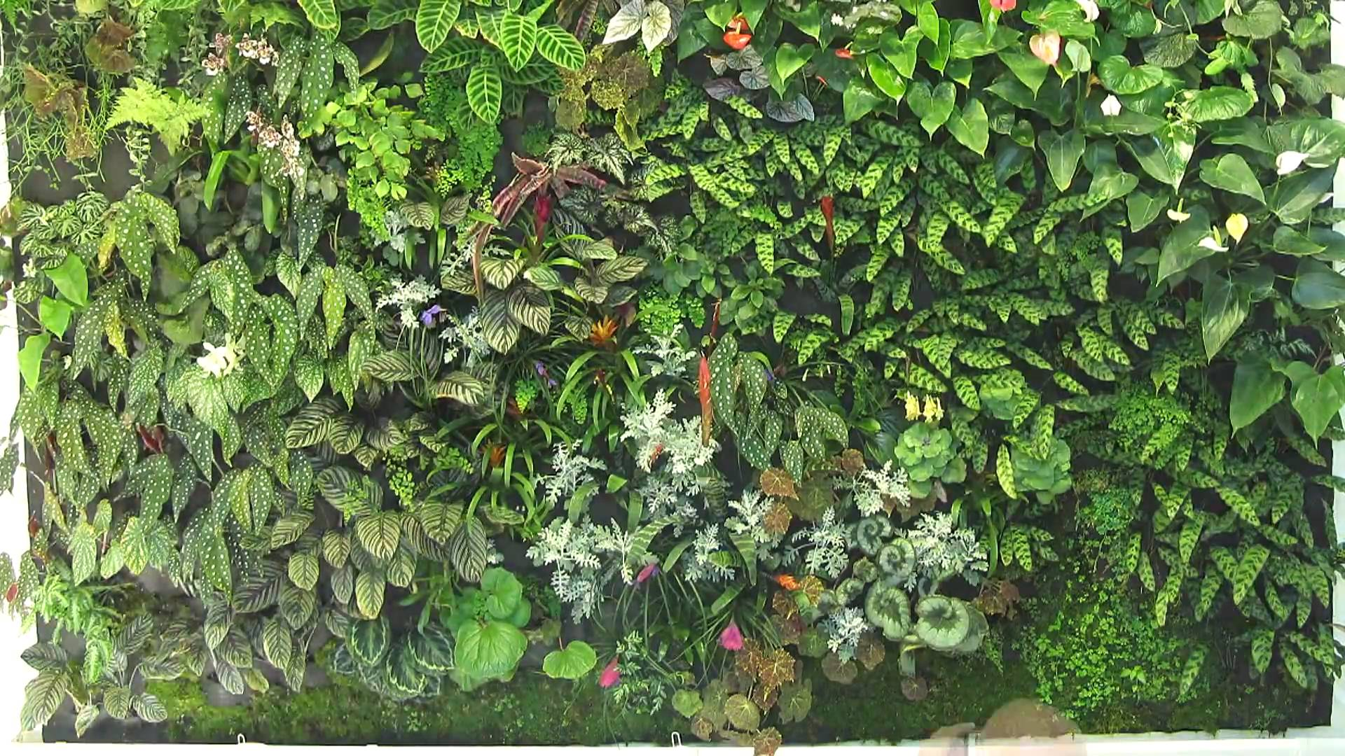 Garden Bush: Free Photo: Plant Wall