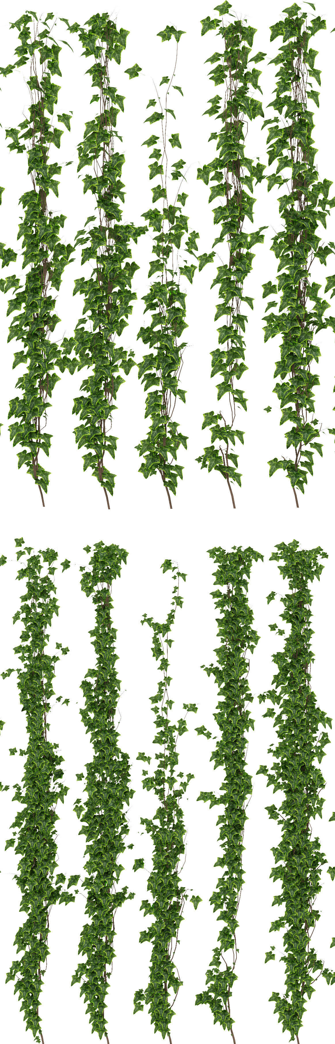 3D Wall of ivy leaves | CGTrader
