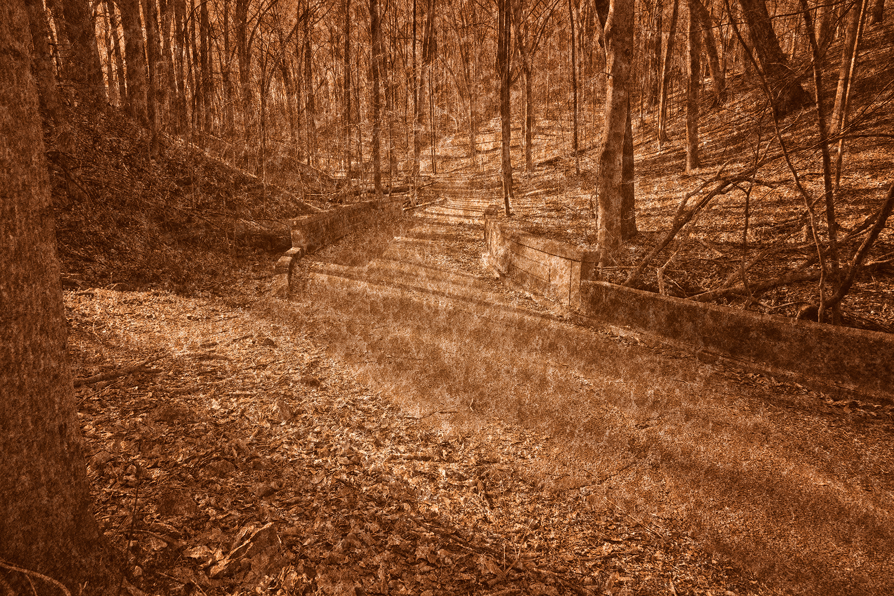 Wander Rust Forest Trail, Abstract, Passage, Rusty, Rustic, HQ Photo