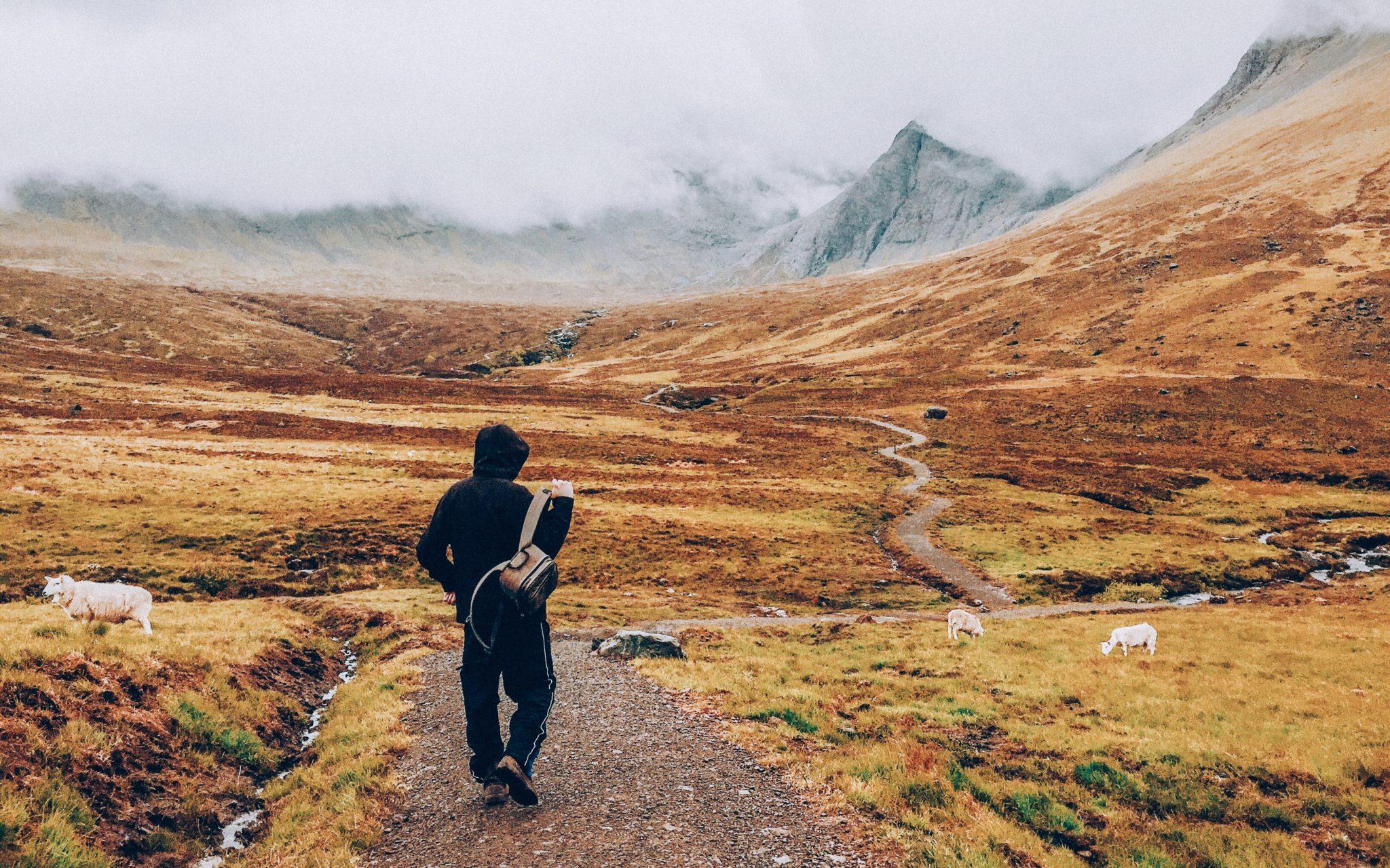 Wandering photo