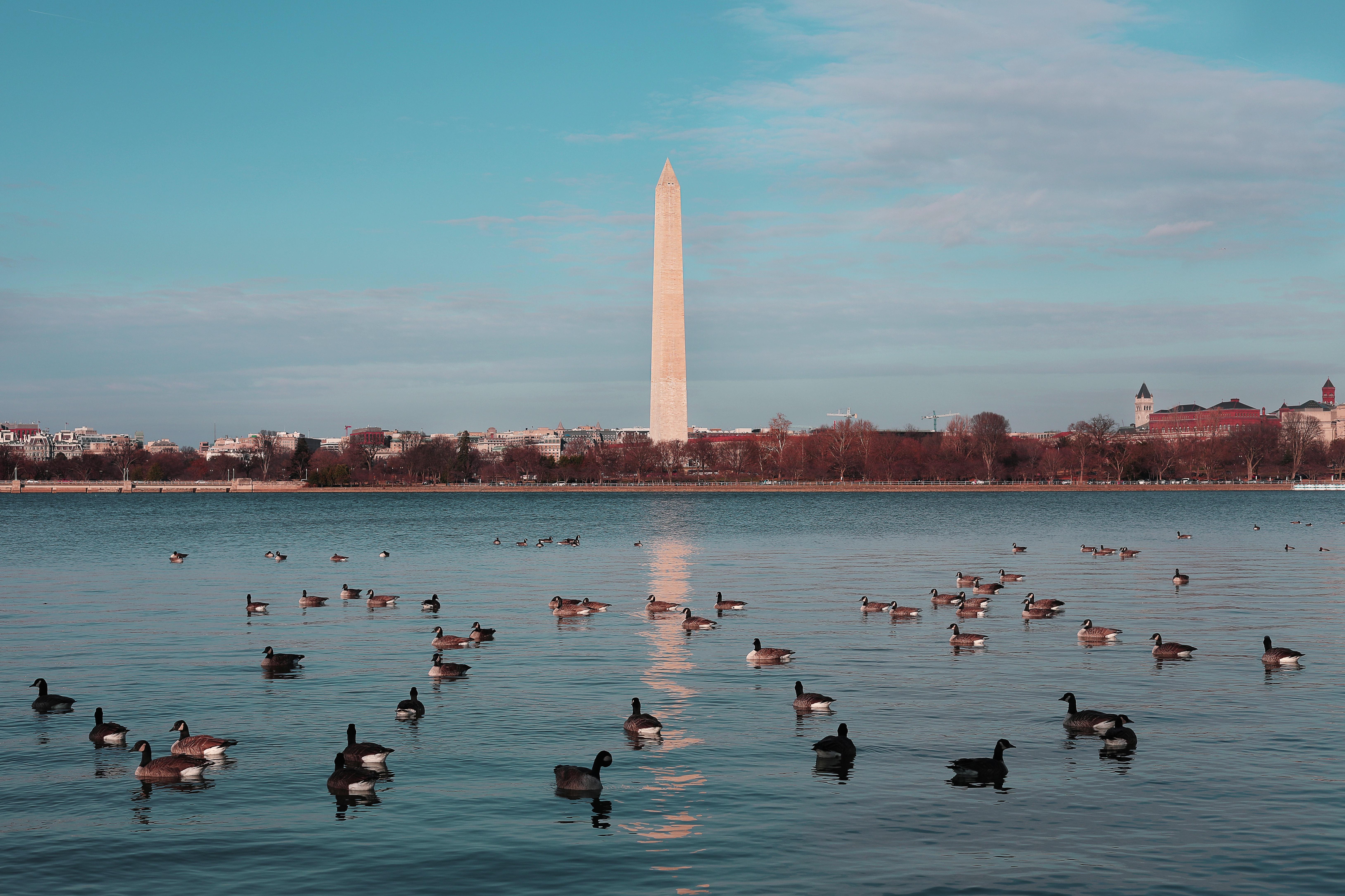 Washington Monument, USA, Animals, Reflection, Waterfront, Water, HQ Photo