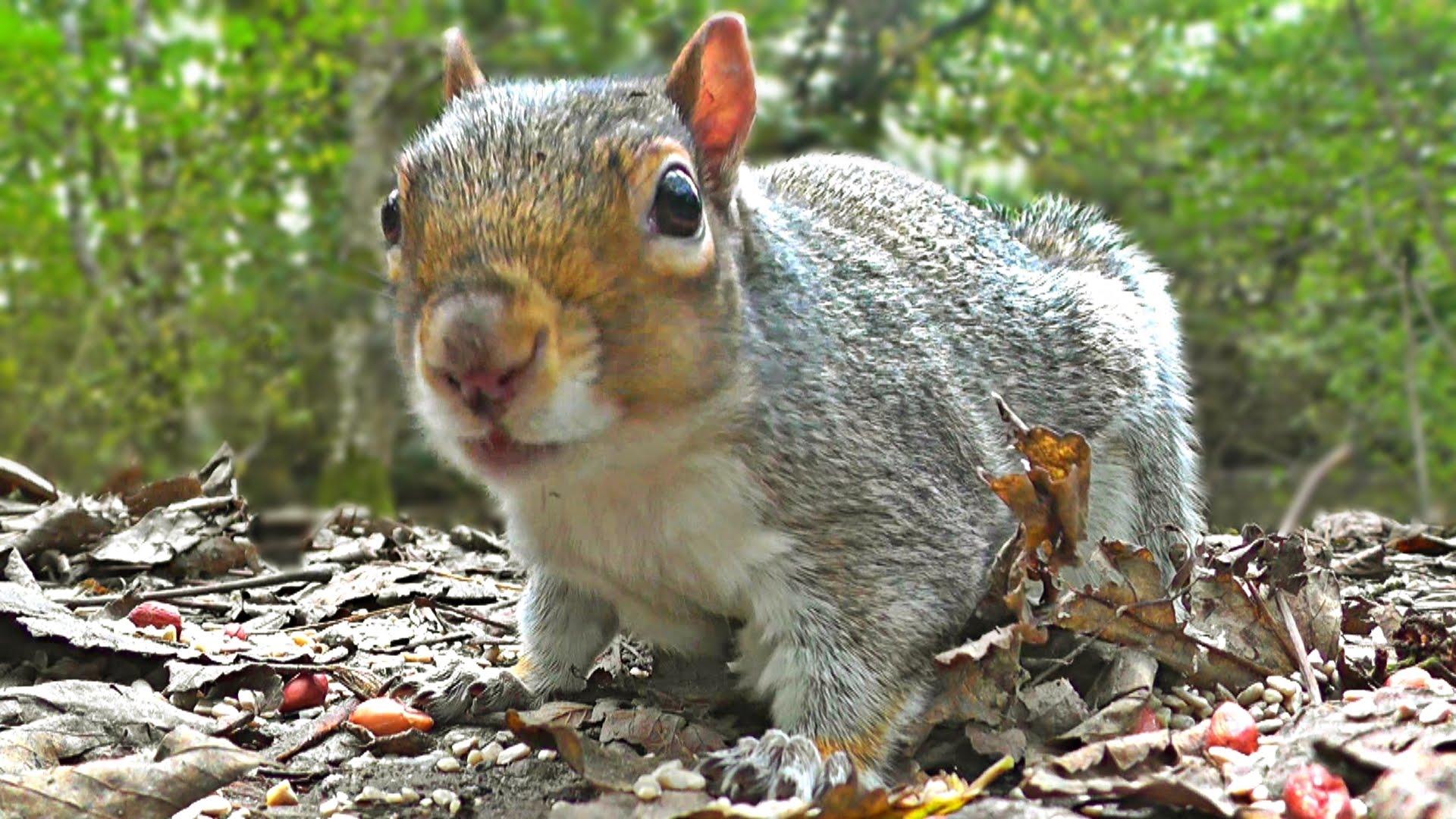 Watching squirrel photo