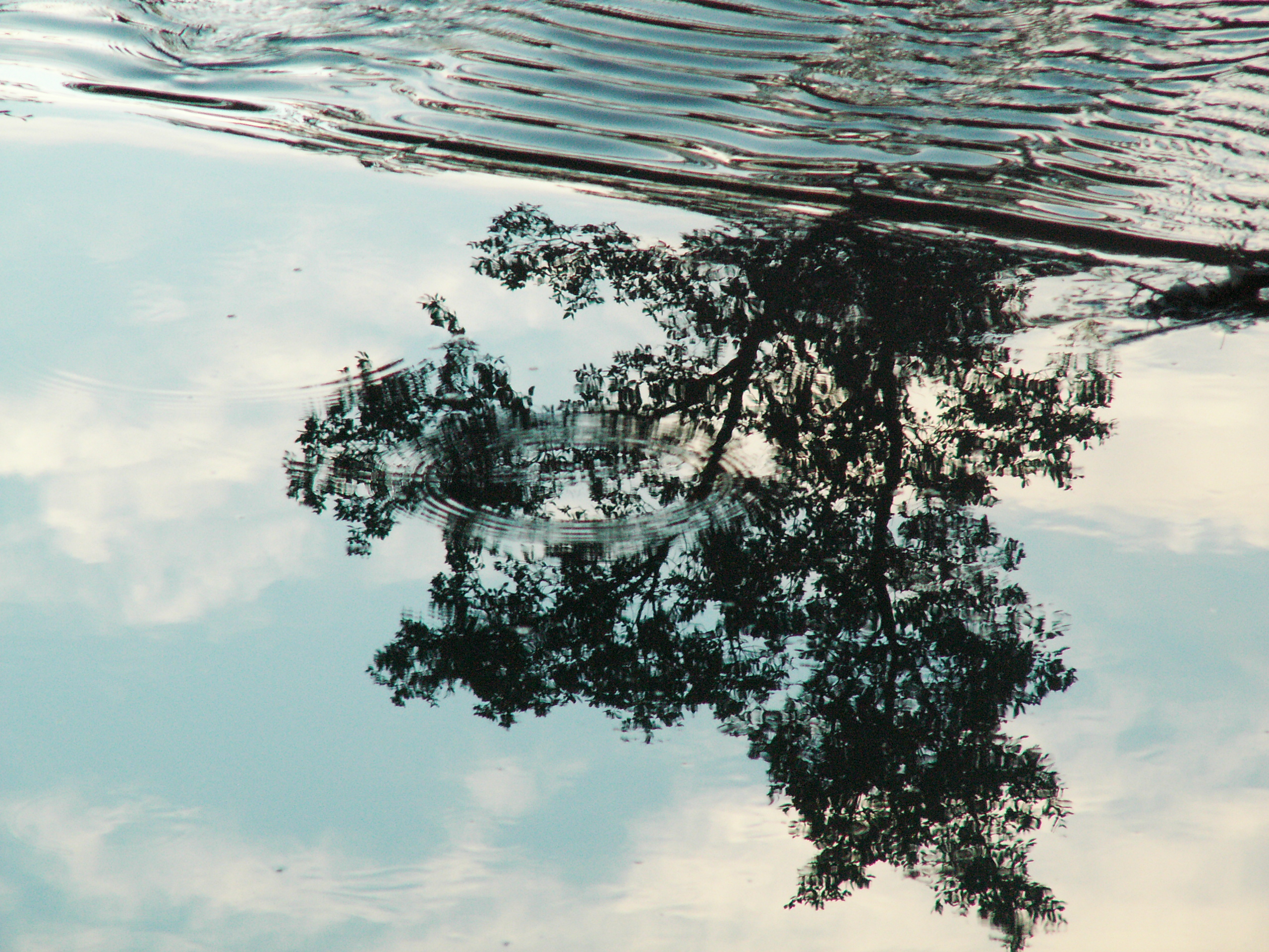 Water, Surface, Tree, Wet, Sky, HQ Photo