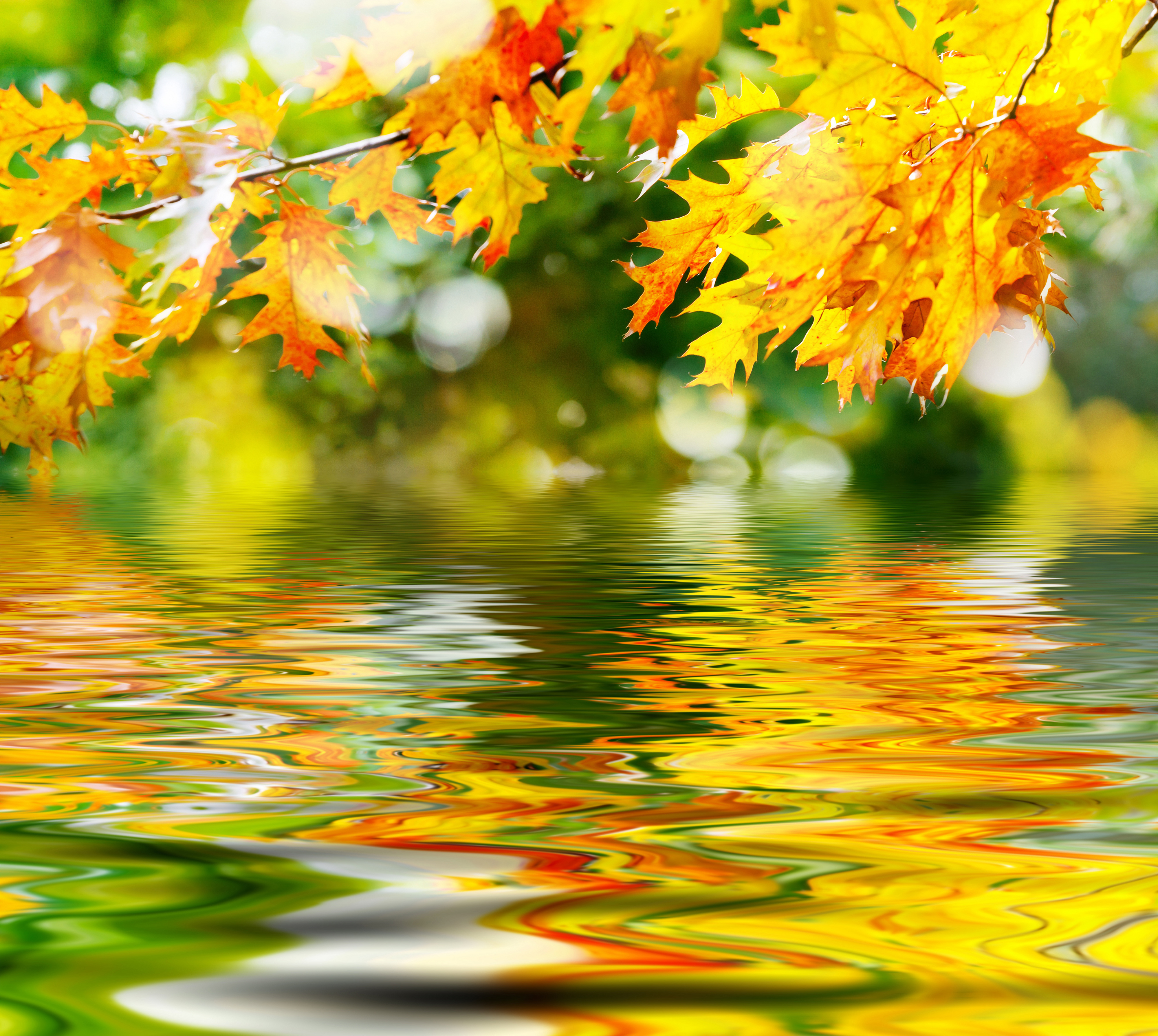 Autumn Leaves and Water Background | Gallery Yopriceville - High ...