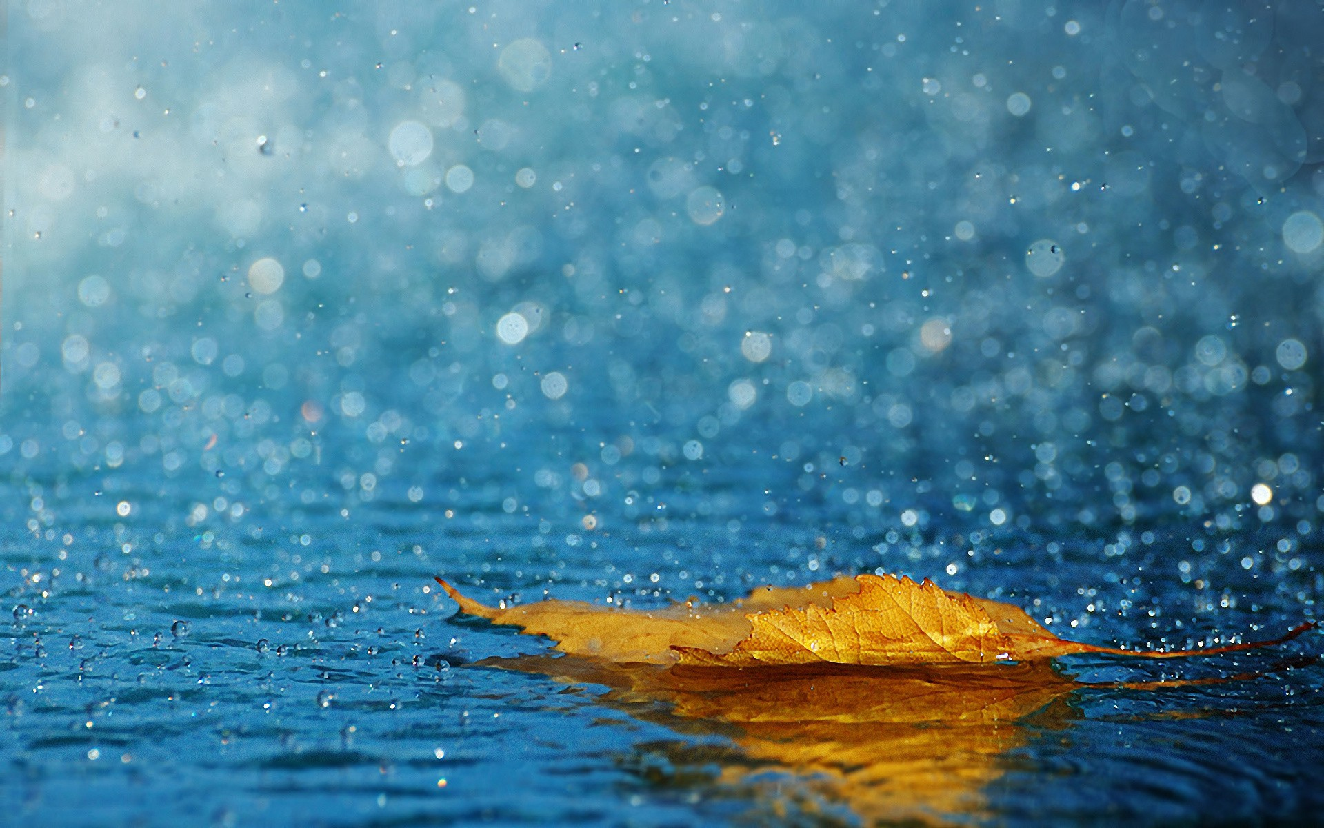 fresh air, fallen,leaves, leaves, drops,amazing nature, healthy ...
