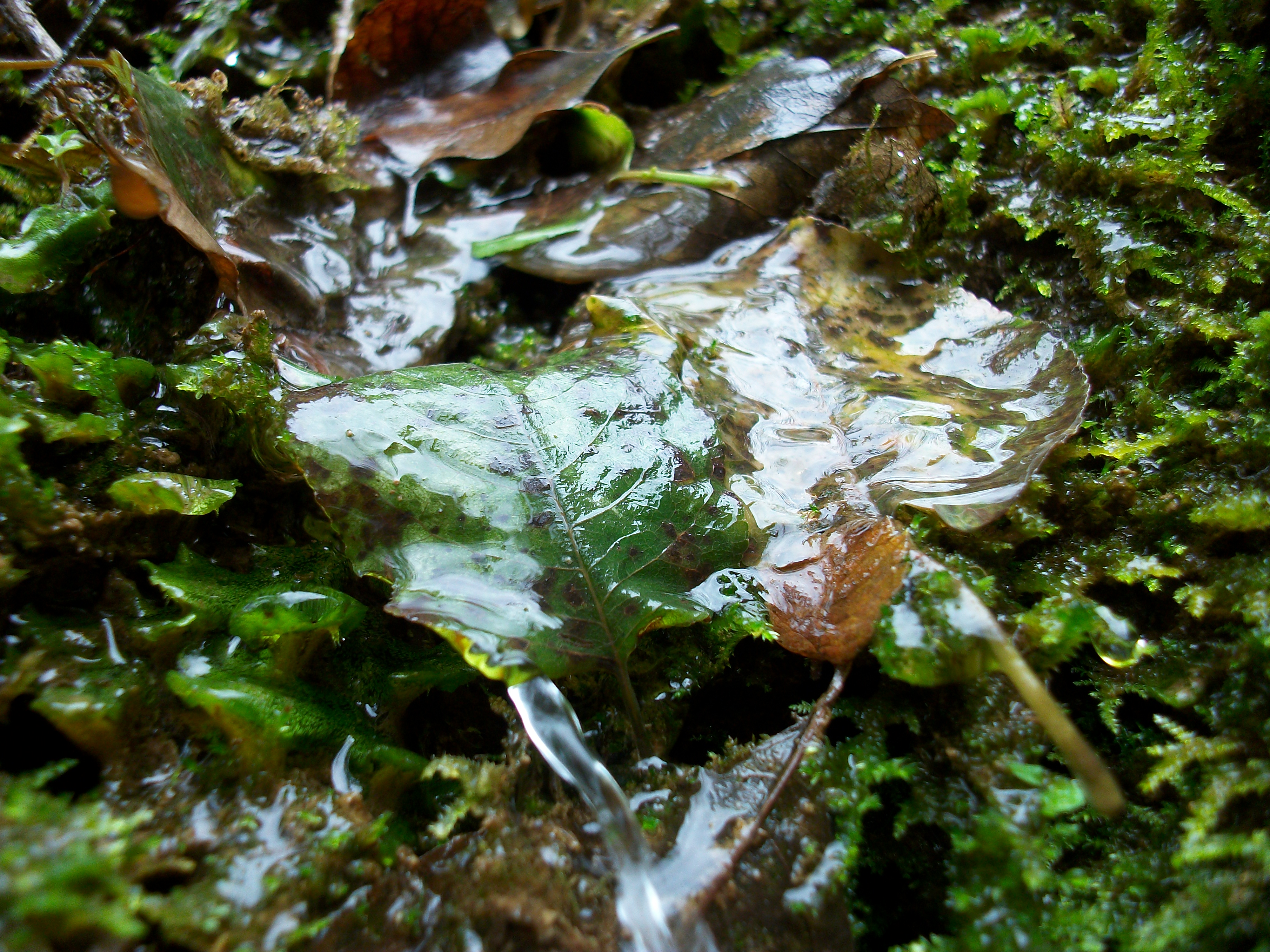 Water and Leaves, Green, Leaf, Leaves, Nature, HQ Photo