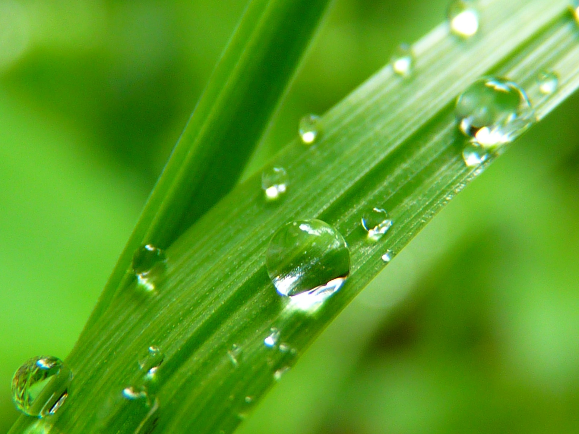Water Your Lawn...When? | Southern Scape Huntsville
