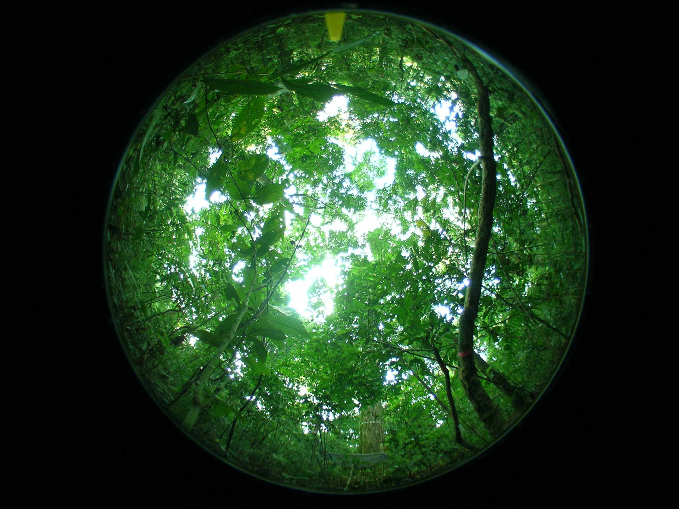 First rainforests arose when plants solved their plumbing problem ...