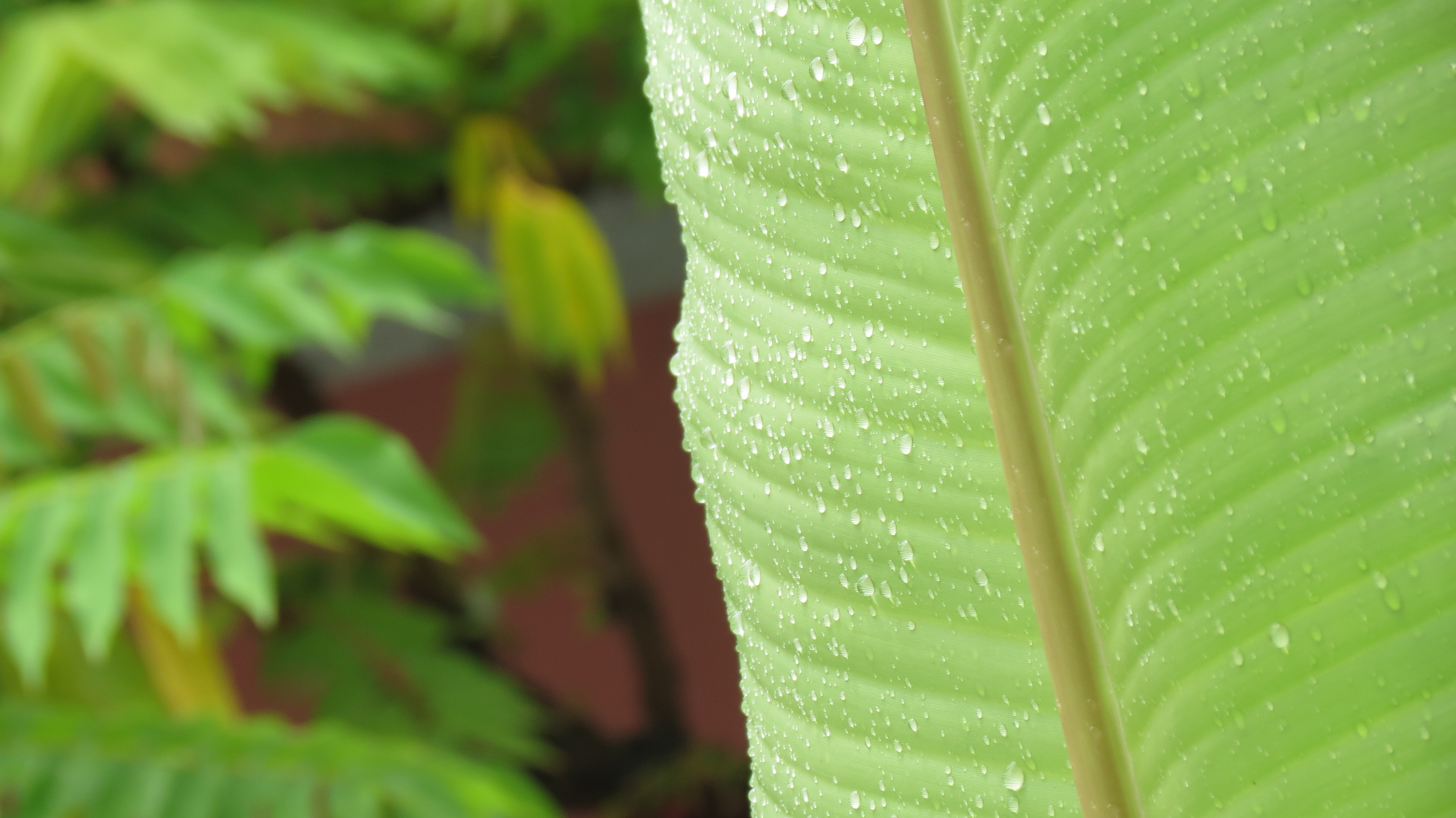 Water Droplets and Plants, are they the Best Buddies??? | catchminu