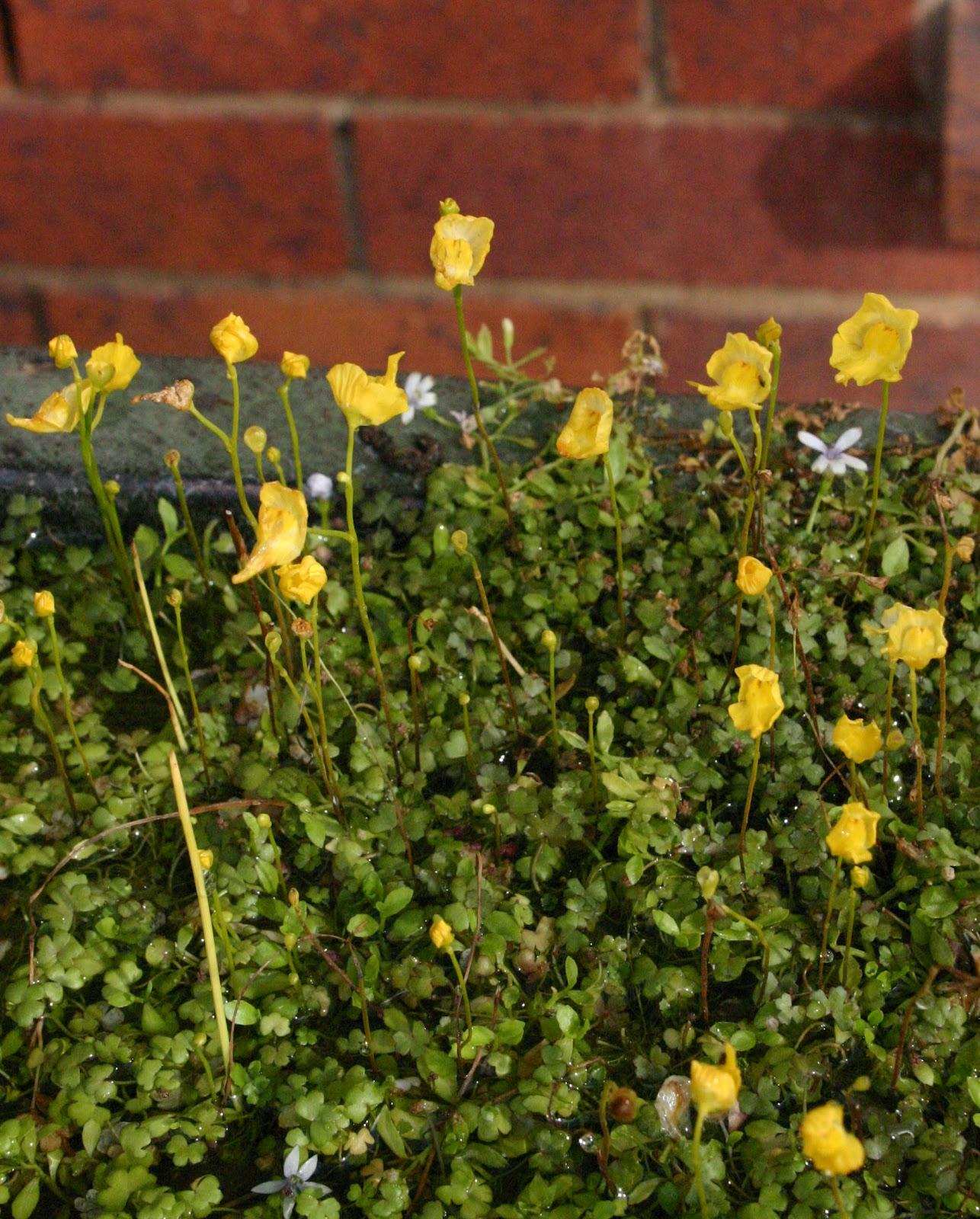 Toowoomba Plants: May 2012