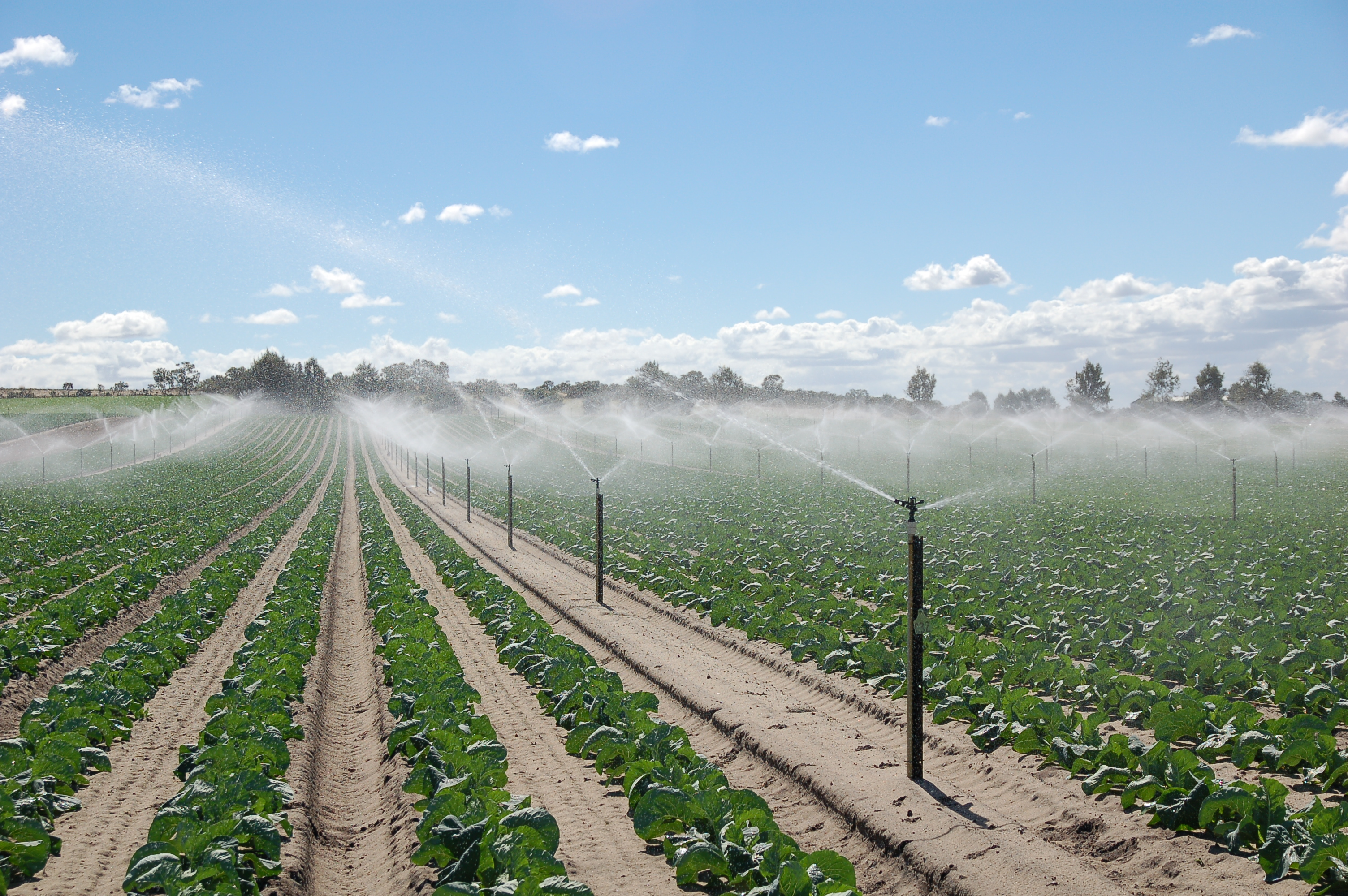 Water salinity and plant irrigation | Agriculture and Food