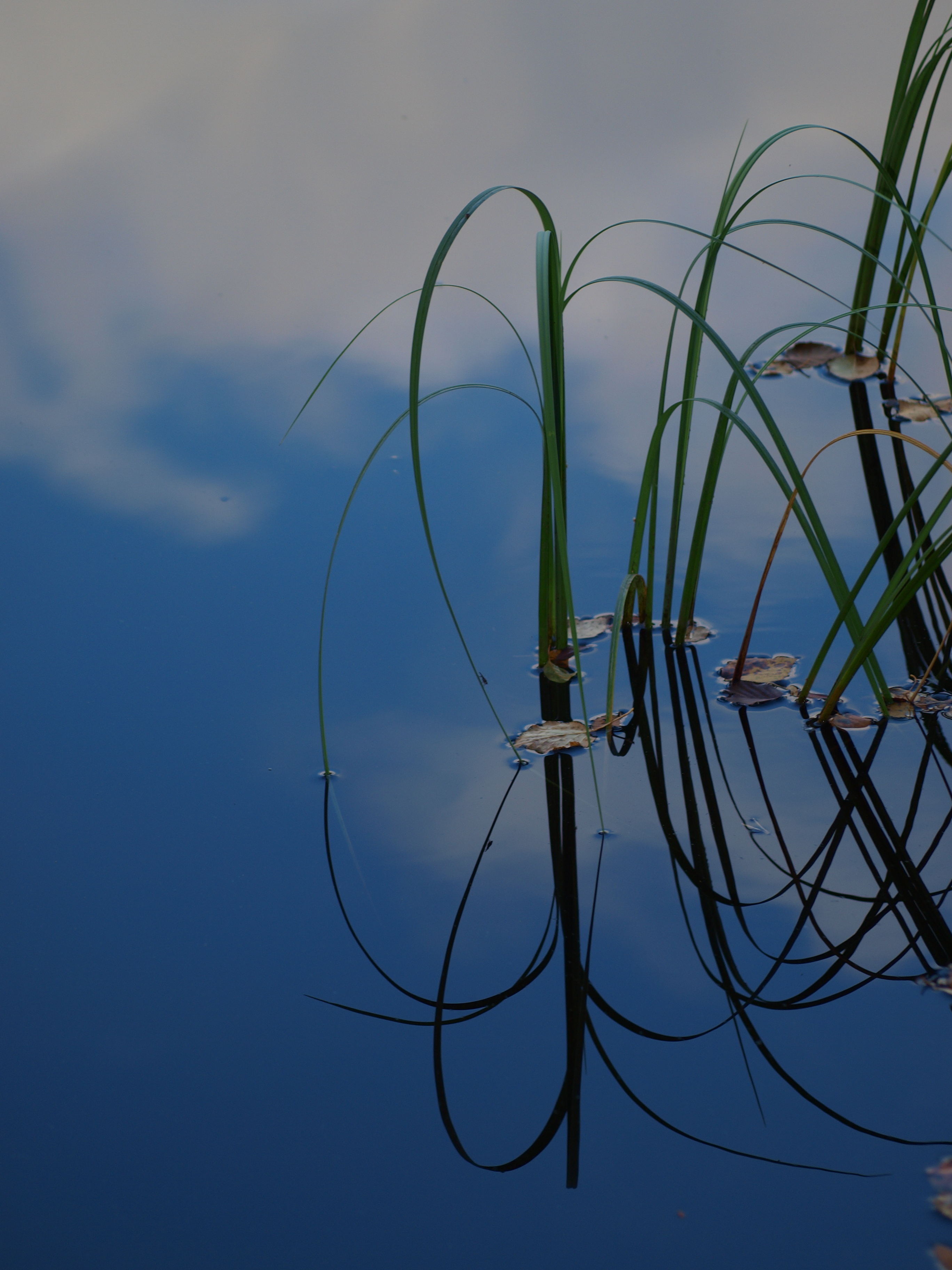 Water and plants, Water, Wet, Summer, Reflection, HQ Photo