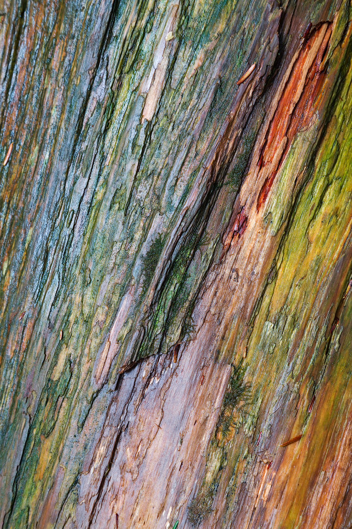 Water colored wood texture photo