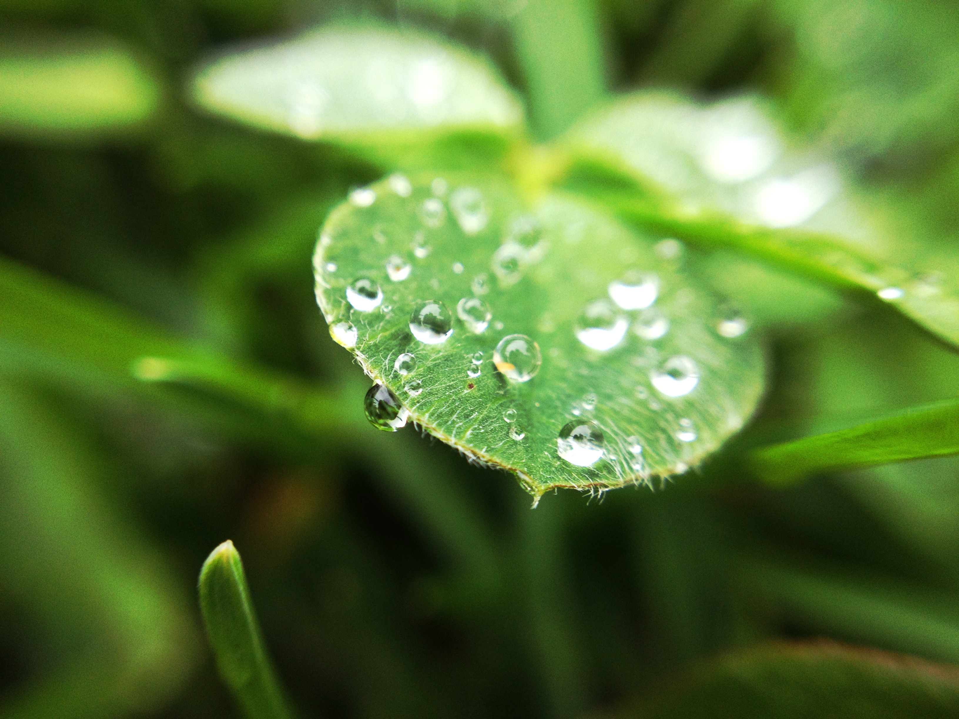 photography: spring dew – n. vujosevic photography