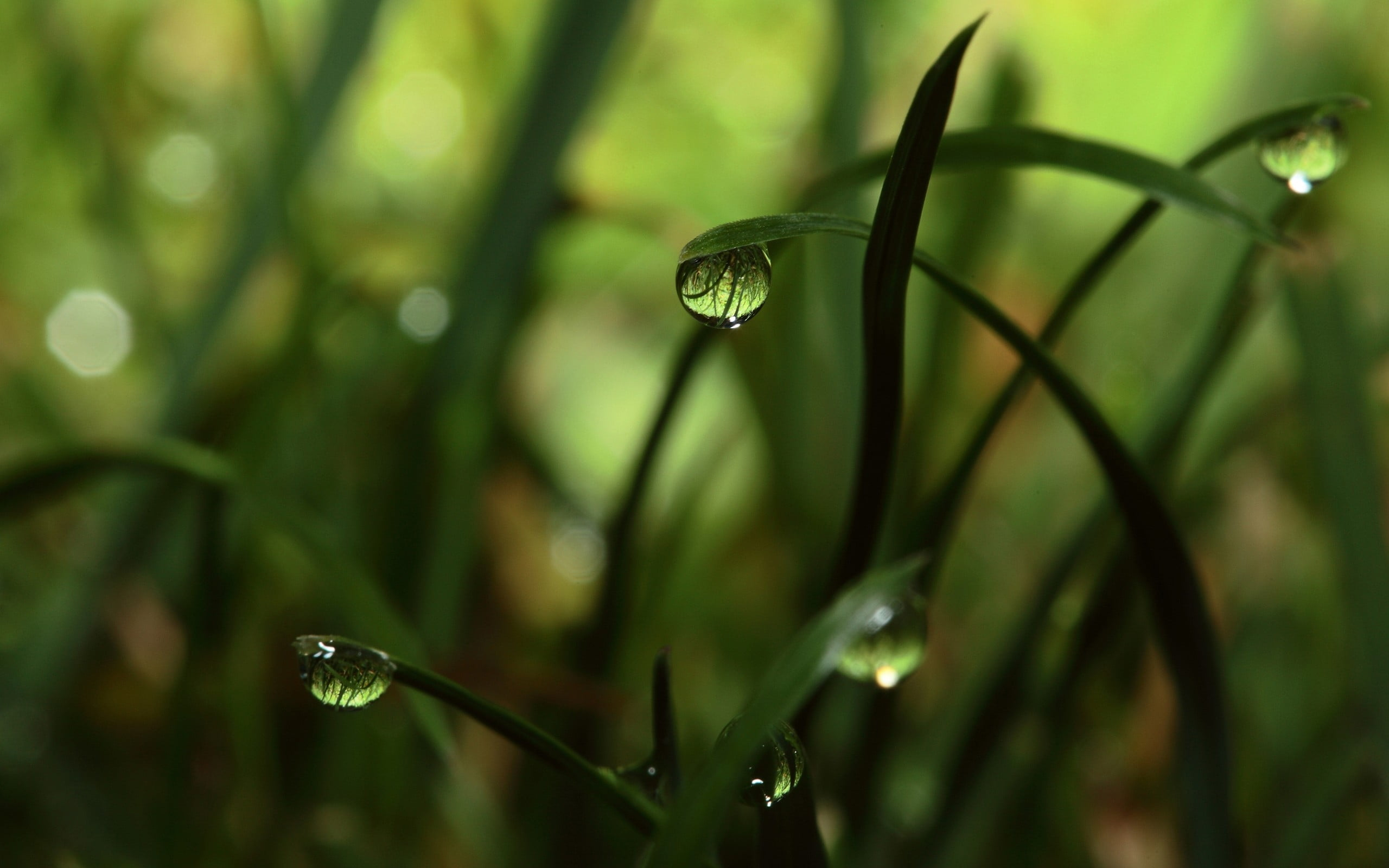 Green grass water dew photography HD wallpaper | Wallpaper Flare