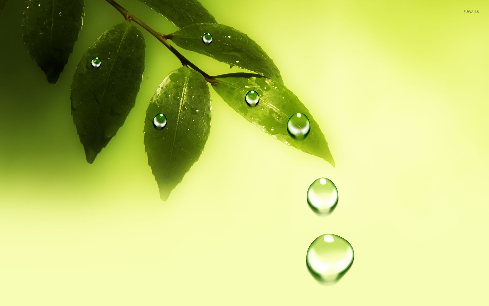 Water drops on the leaves wallpaper - Digital Art wallpapers - #20836