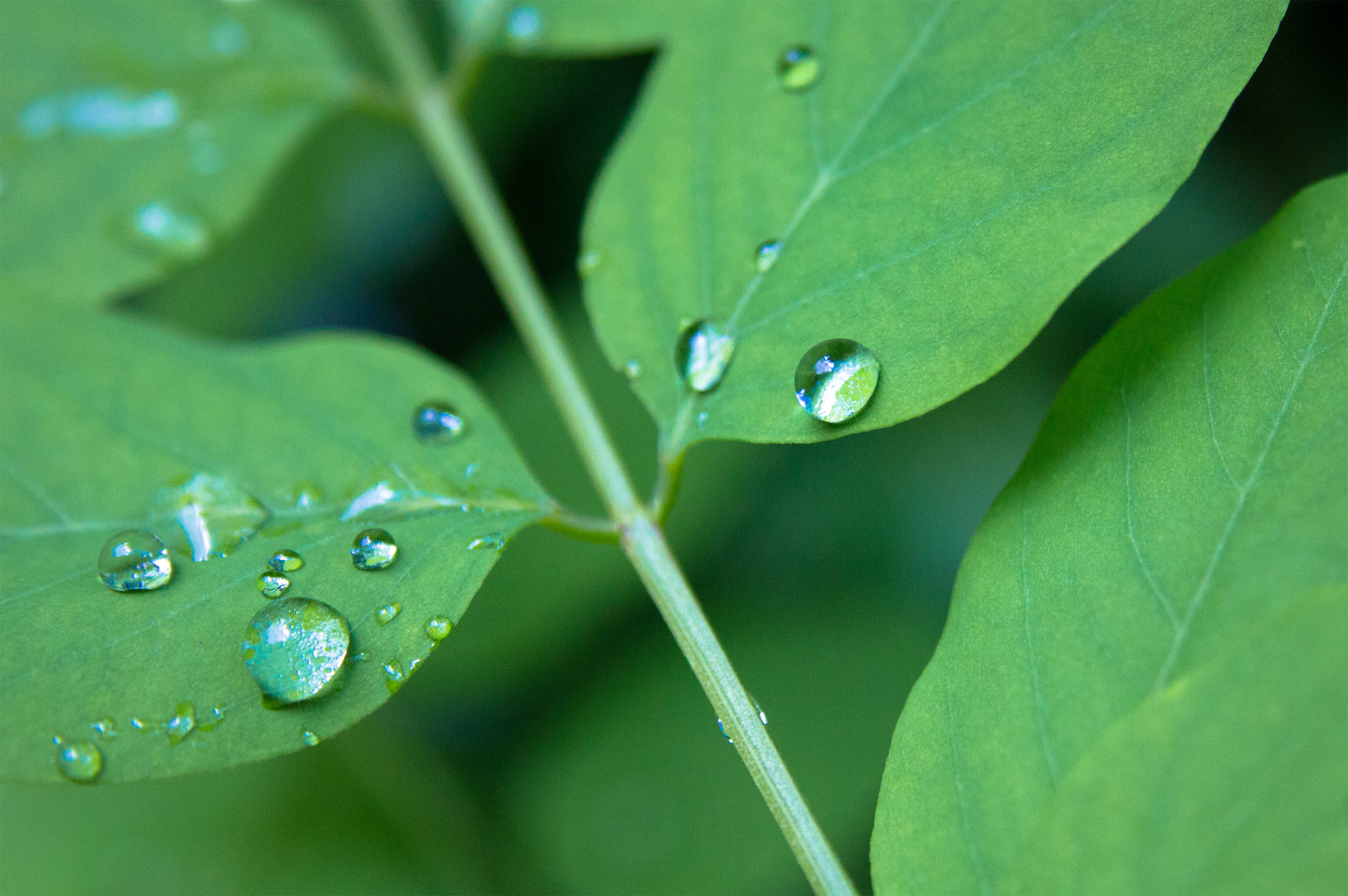 Water drops, Drops, Green, Leaf, Water, HQ Photo