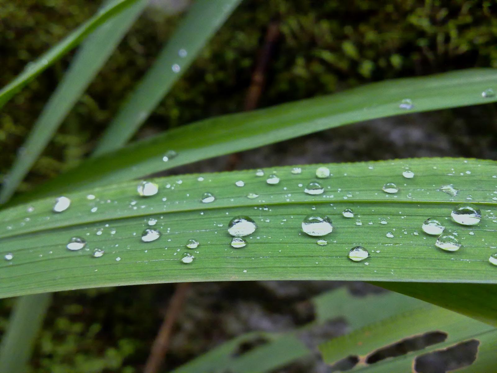 Water drops photo