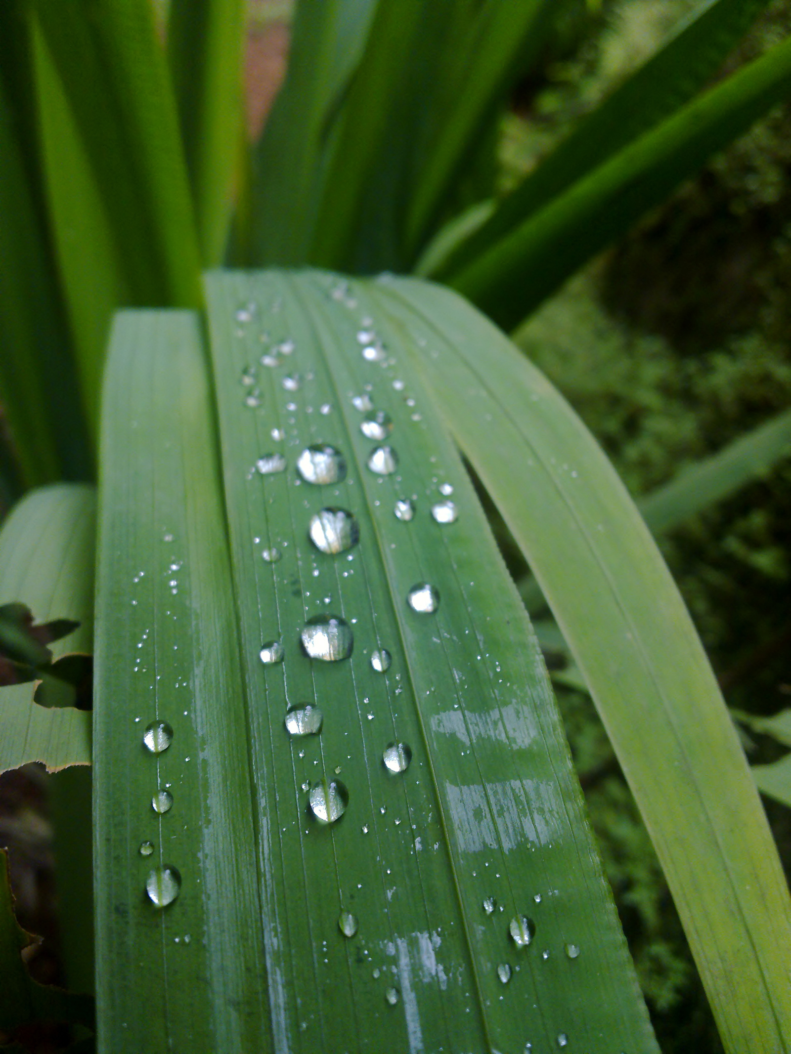 Water drops, Drops, Green, Leaf, Natural, HQ Photo
