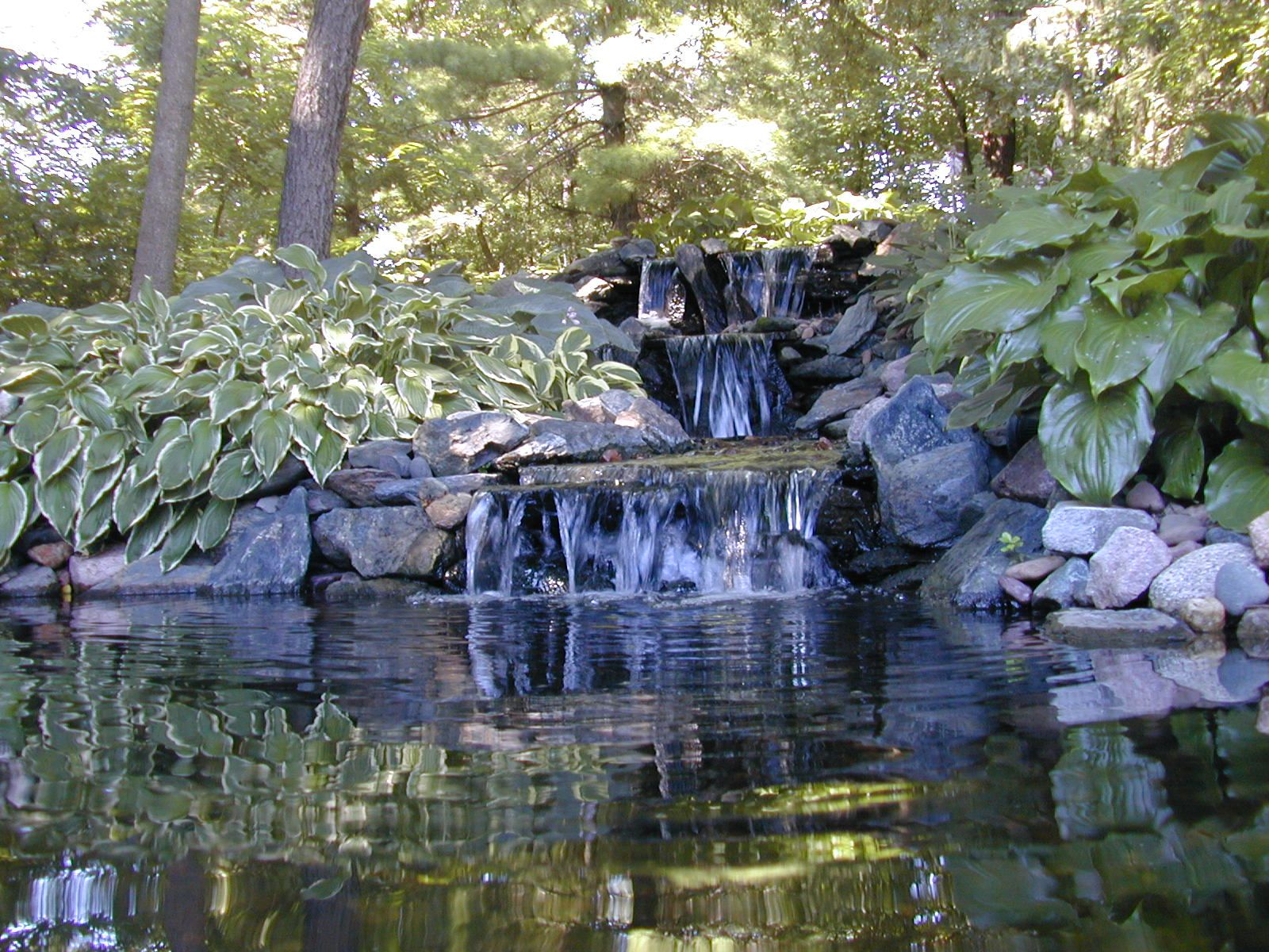 Houston Water Garden, Water Garden Houston, Houston Water Gardens ...