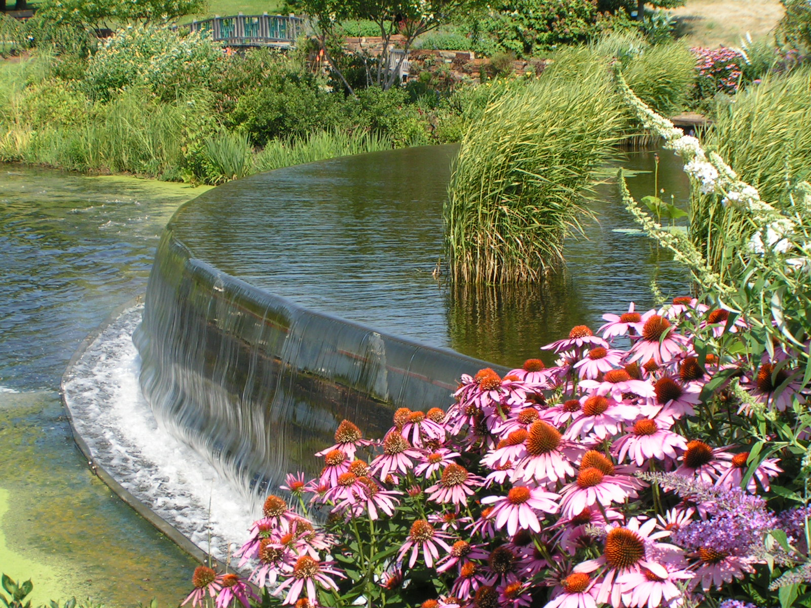 Water Garden, Bspo06, Flowers, Garden, Green, HQ Photo