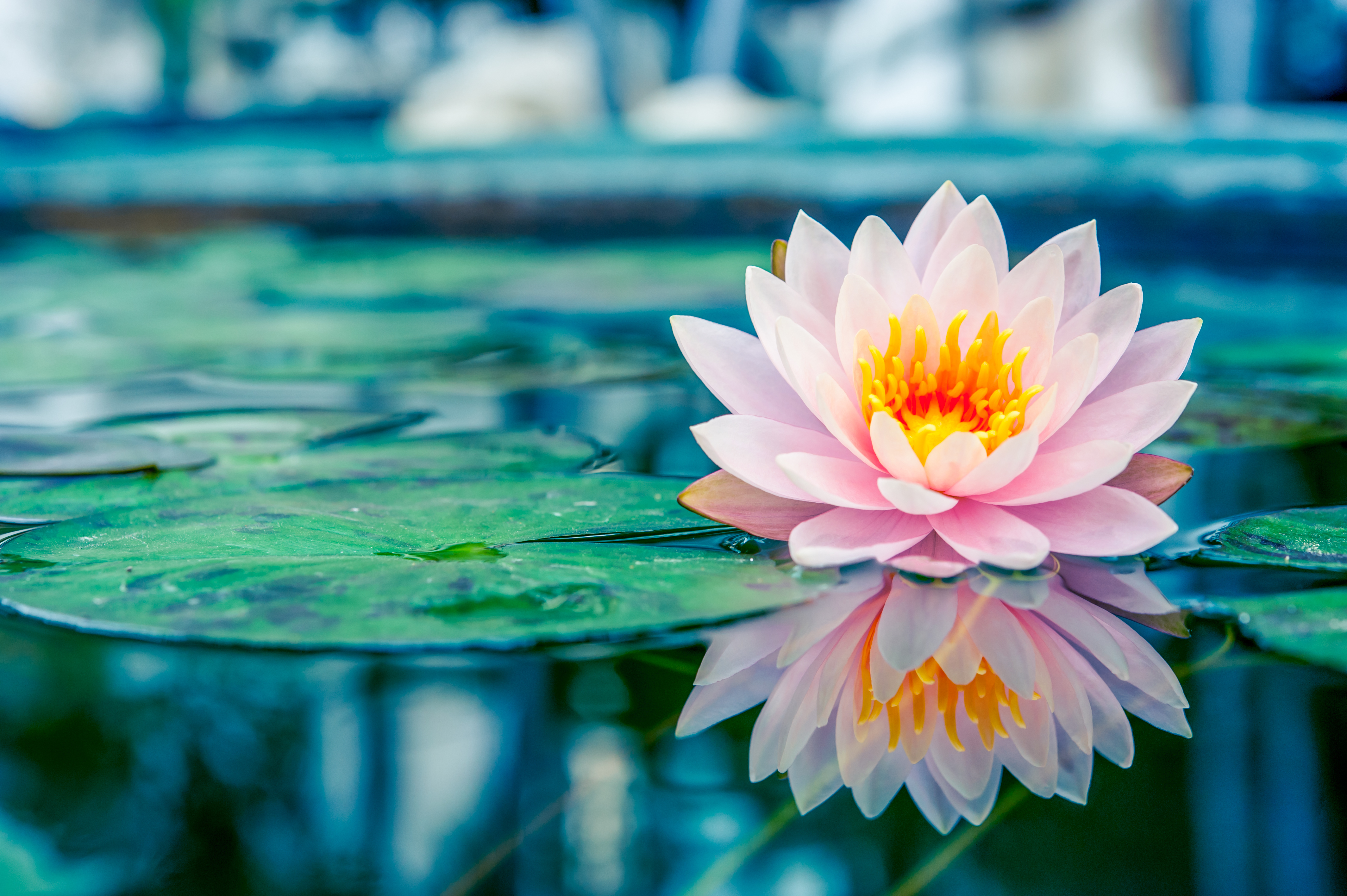 How to succeed with water lilies – Which? Gardening Helpdesk