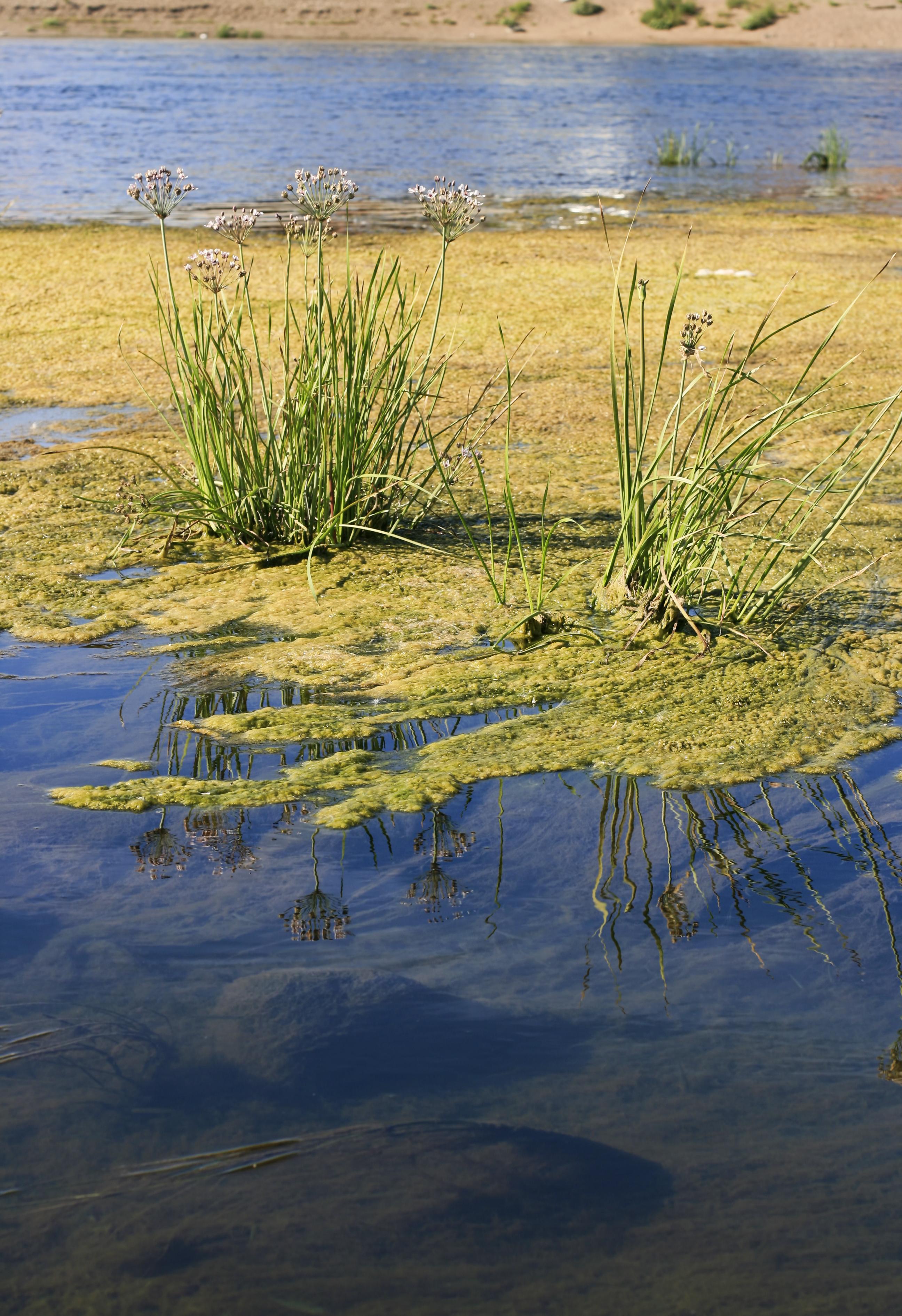 Water scene photo
