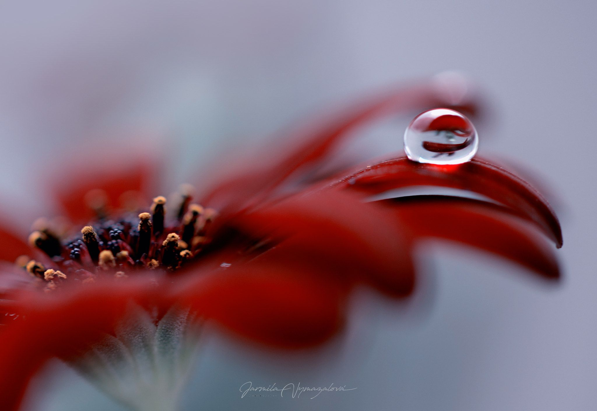 flower drop - flower drop | Water Drop Photography | Pinterest ...