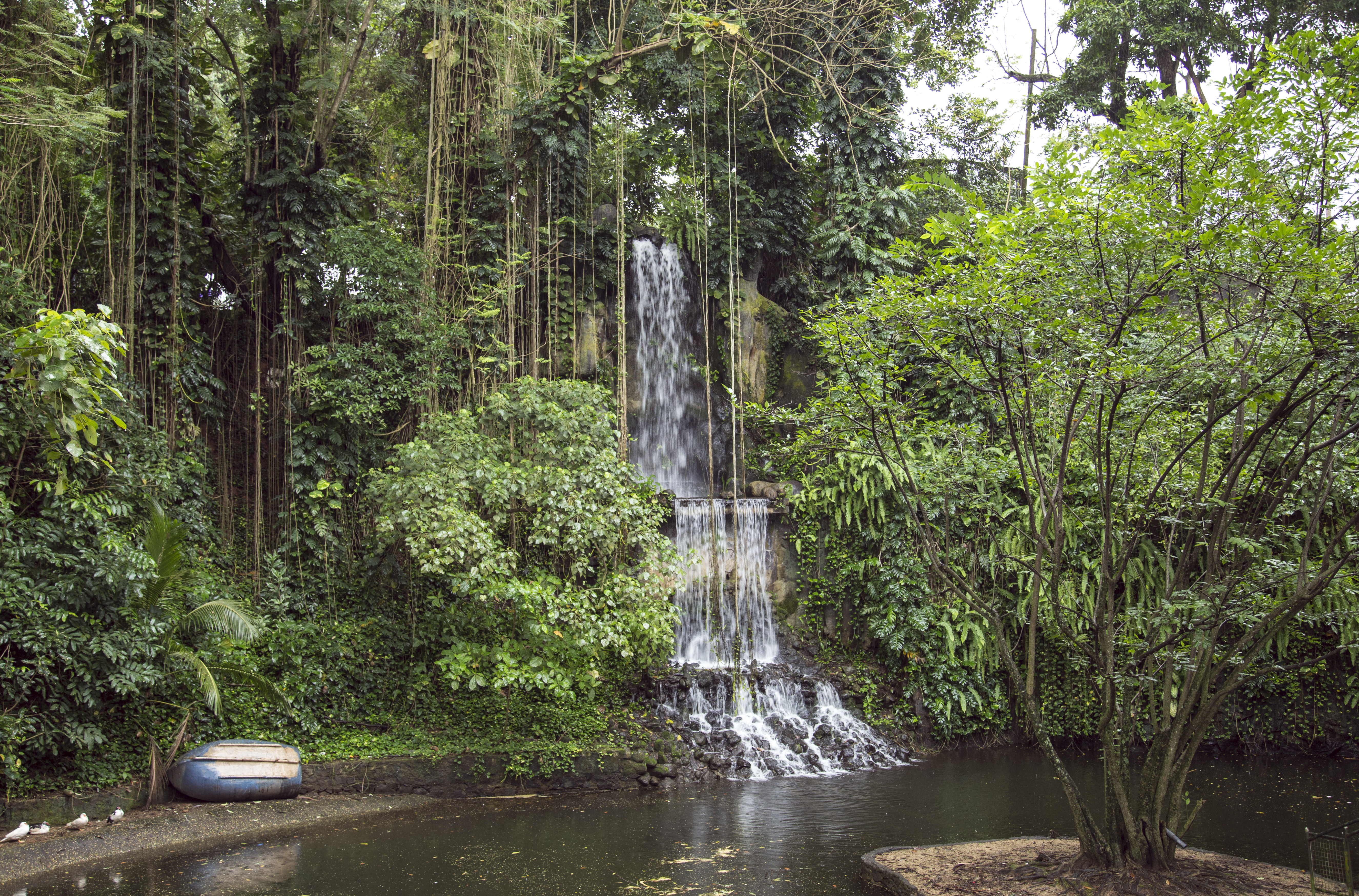 Waterfall in the jungle photo