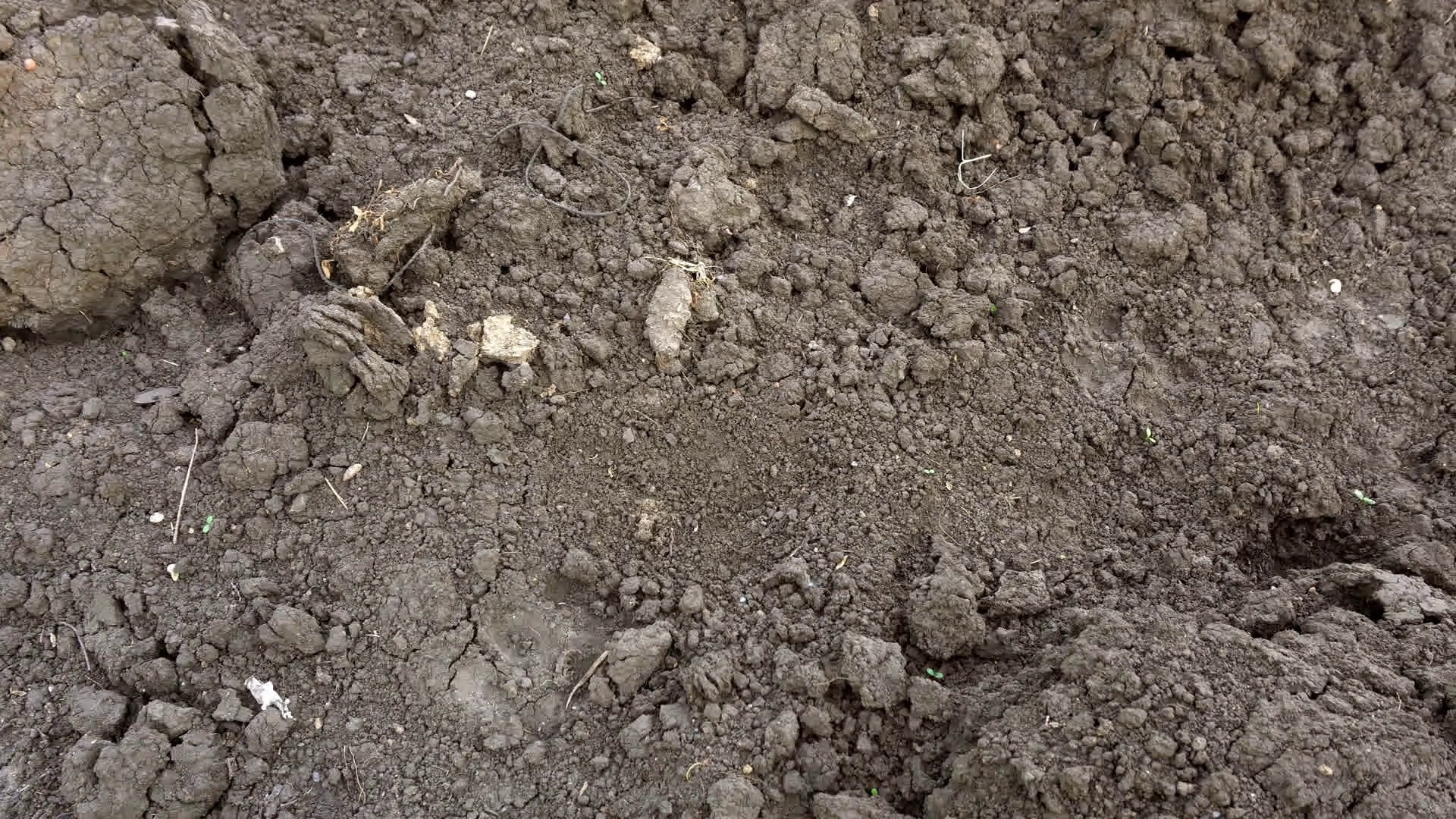Texture of brown dry soil for background. Dolly shot. Stock Video ...