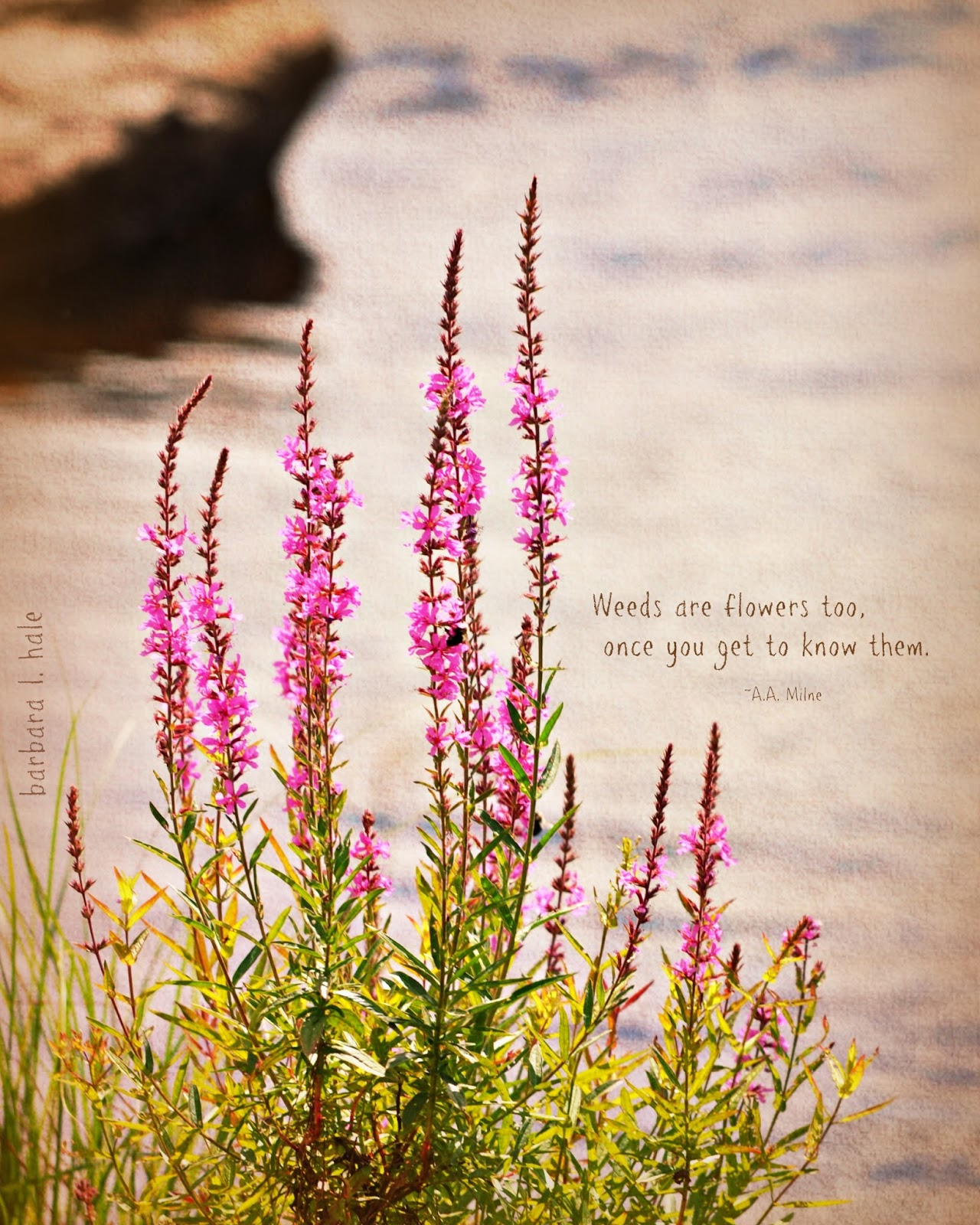 Commonplace Beauty Photography: Weeds are flowers too...
