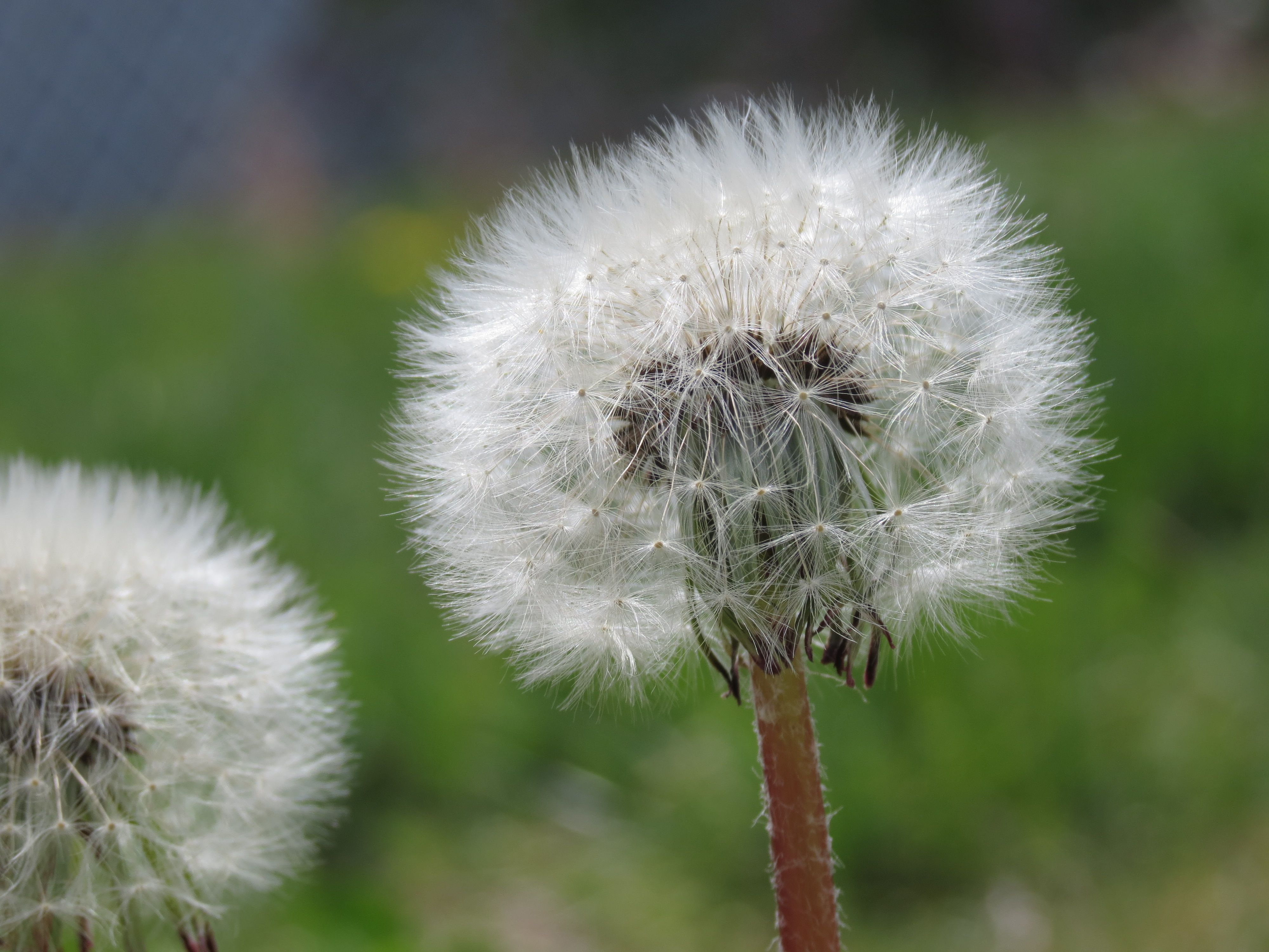 The beauty of Weeds! - Hudson, Nh, | Hudson NH home sweet home ...