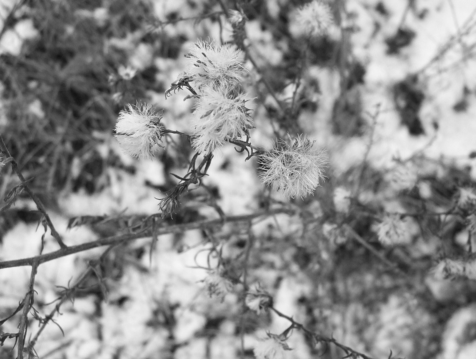 Weeds, monochrome